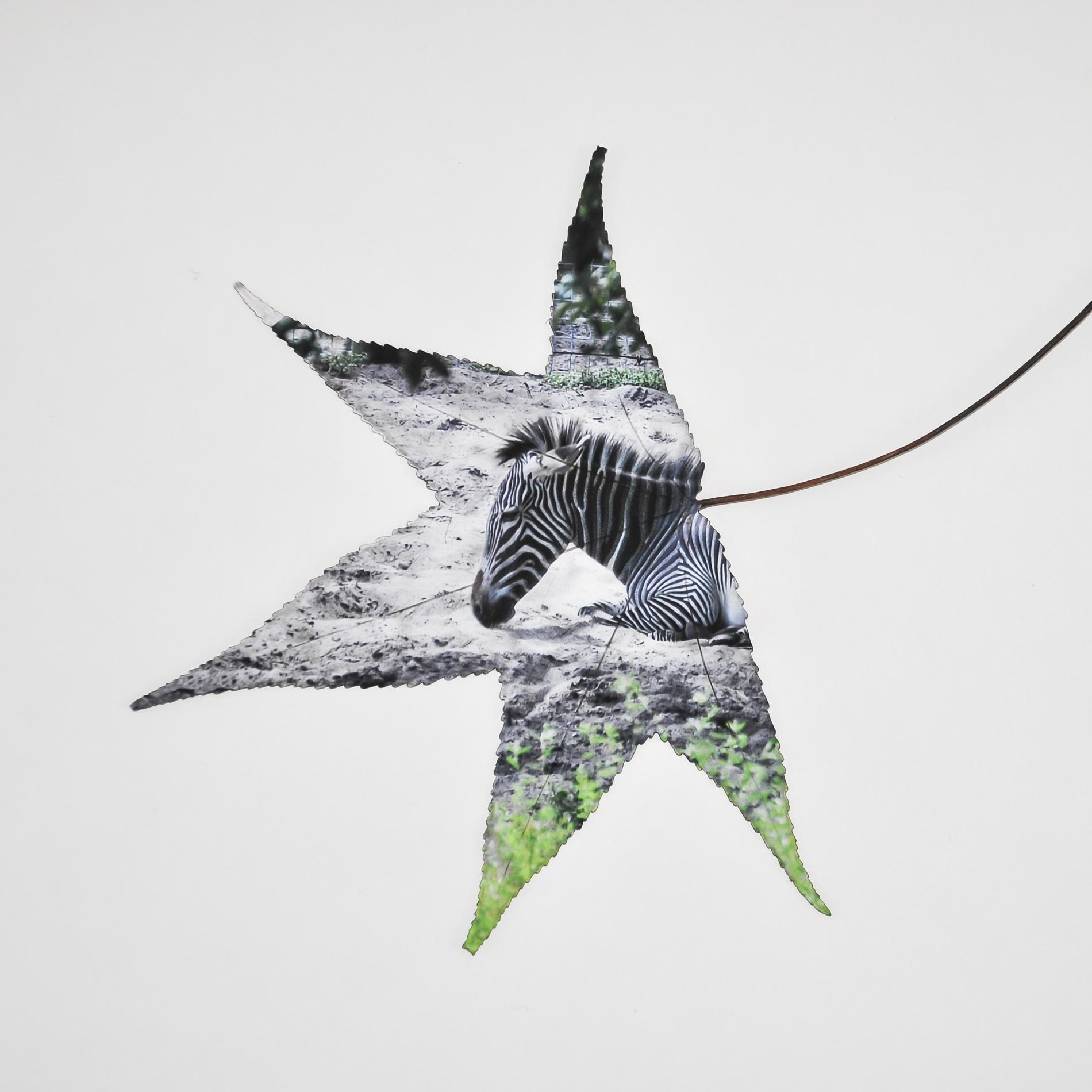 zebra_leaf.jpg