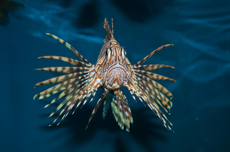 tigerfish.jpg