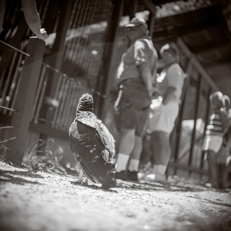 baby_vulture_1.jpg