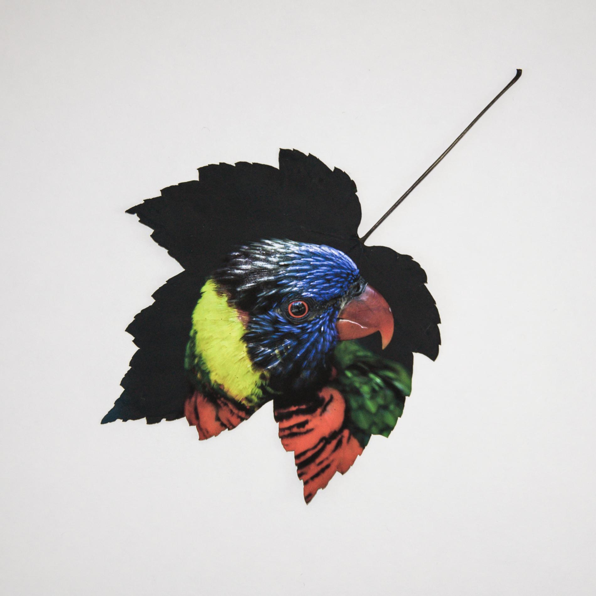 parrot_leaf.jpg