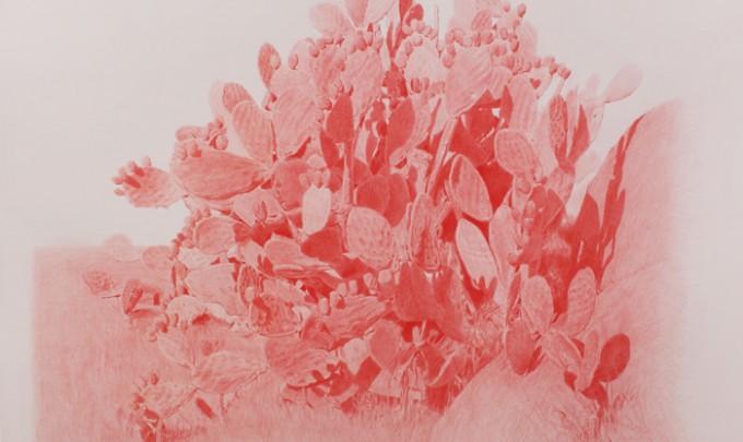 Vin Ryan, Prickly Pear, Sunshine , 2012, pencil on paper, 124 x 146cm