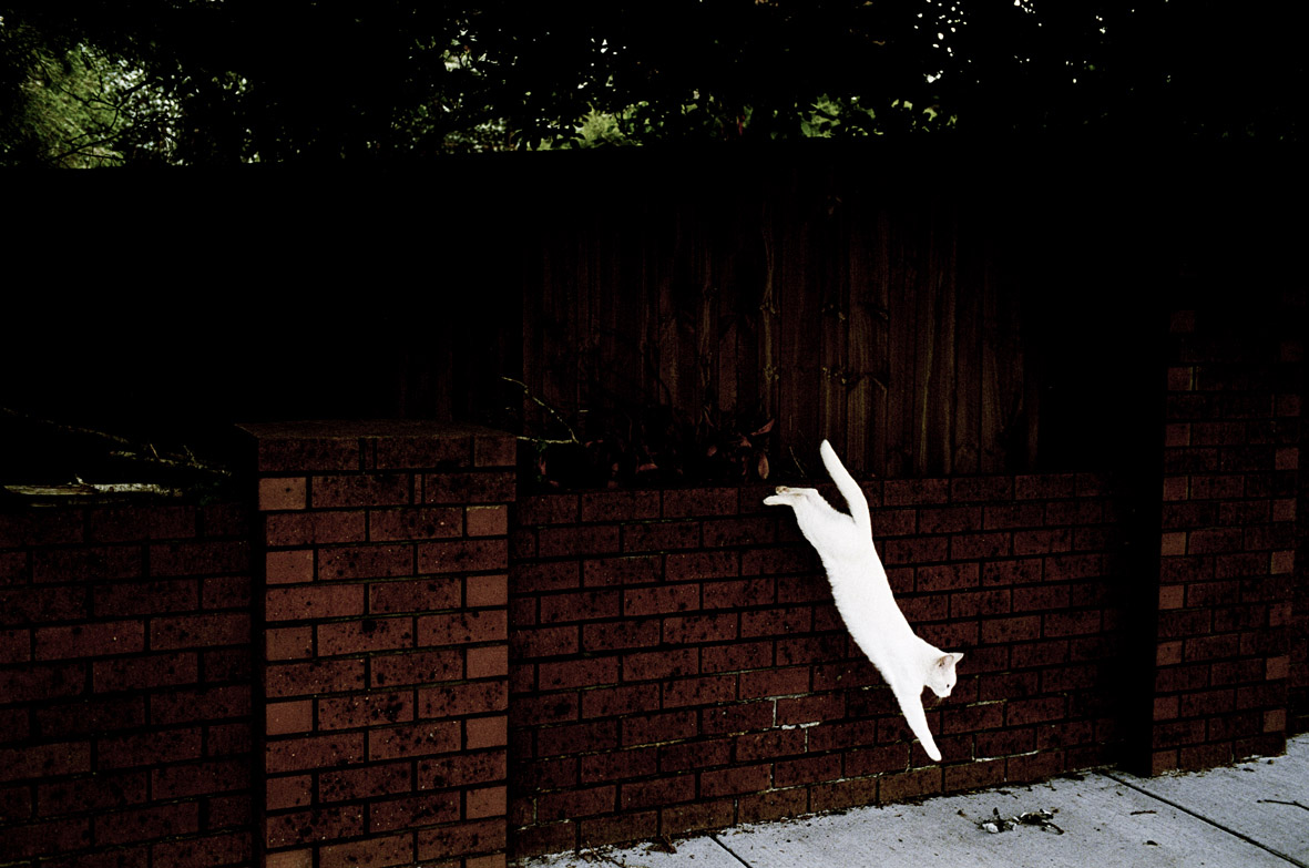 Jesse Marlow,  White Cat , 2011, pure pigment print, edition of 10