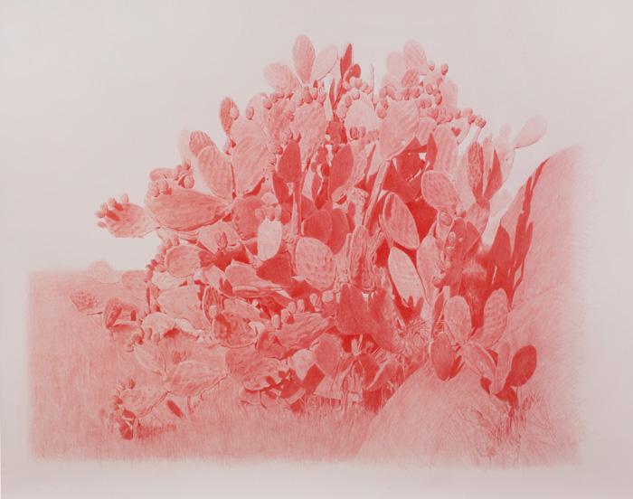 Vin Ryan,  Prickly Pear,  Sunshine, 2012, pencil on paper, 124 x 146cm