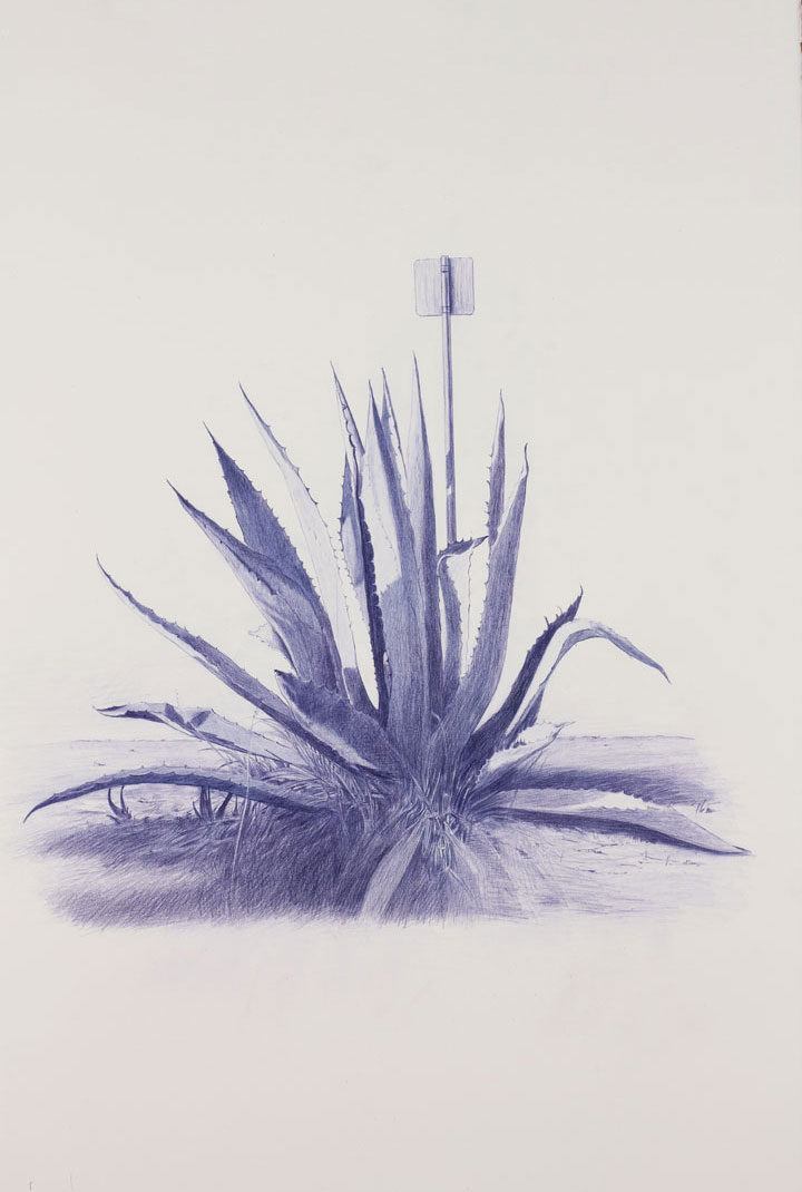 Vin Ryan,  Sign, Sunshine,  2012, pencil on paper, 77 x 57cm