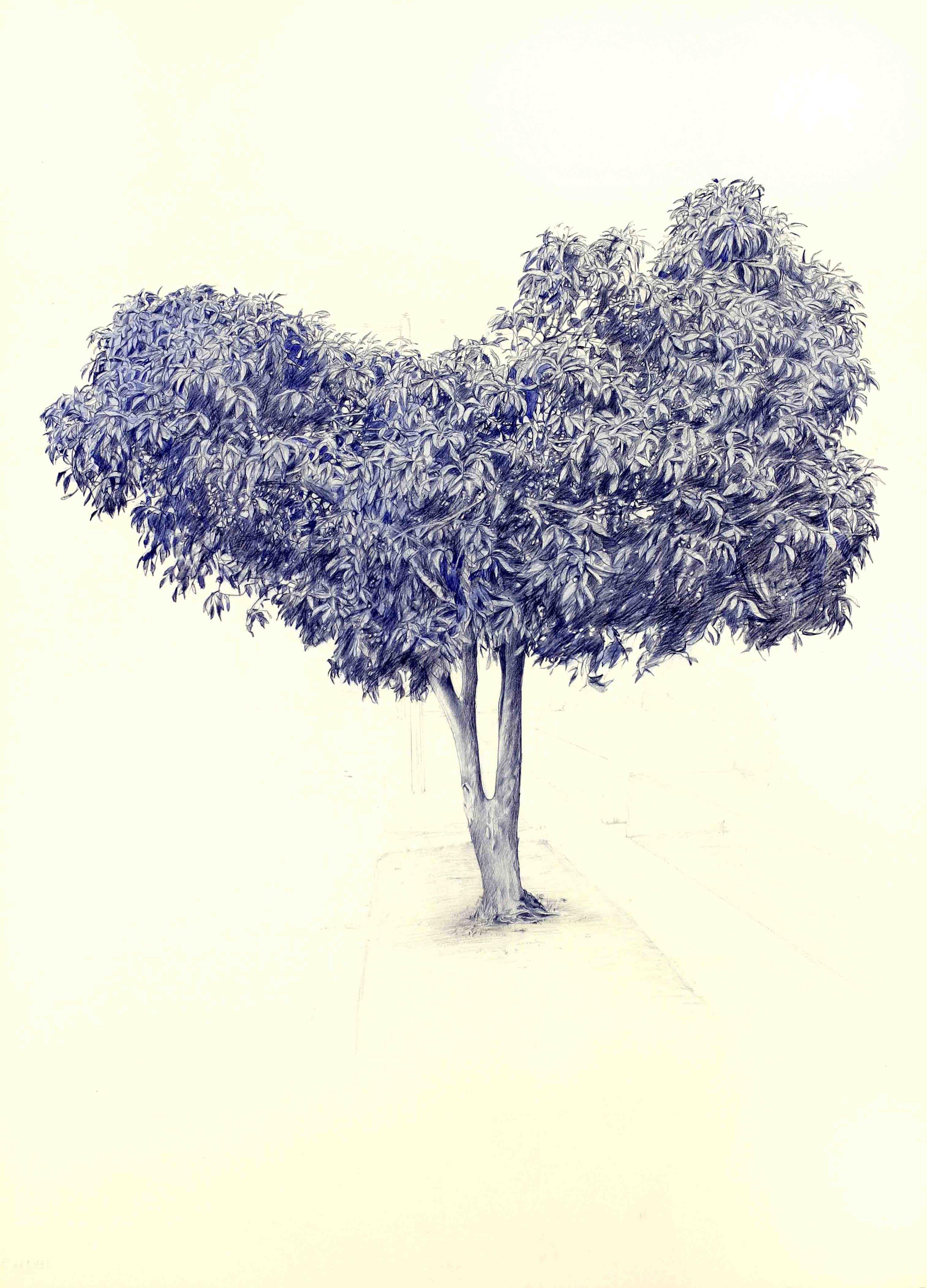 Vin Ryan,  Tree, Sunshine,  2012, pencil on paper, 77 x 57cm