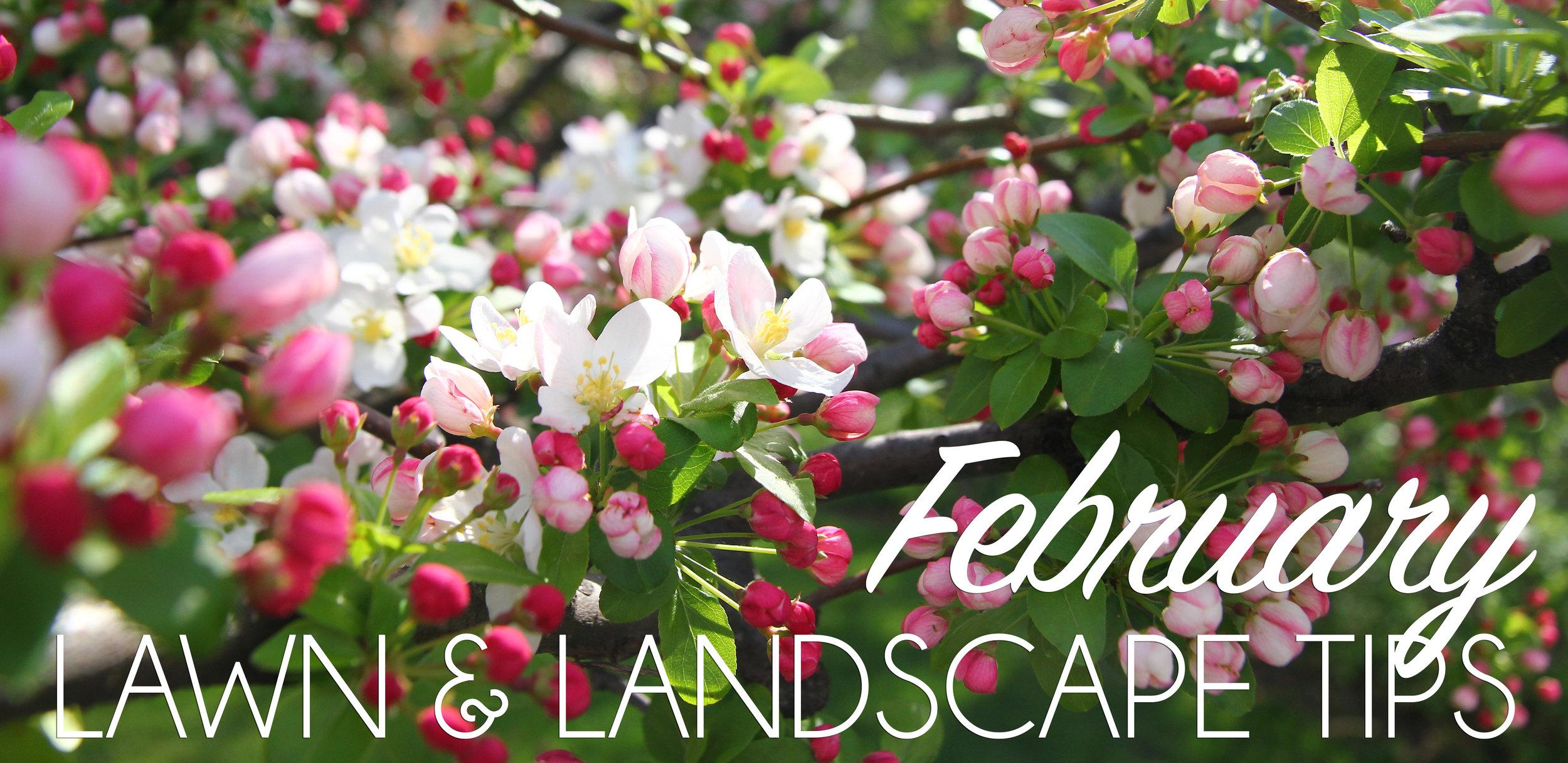 February Lawn & Landscape Header.jpg