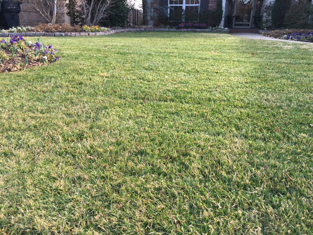 - Fescue lawn after Spring Lawn Maintenance.