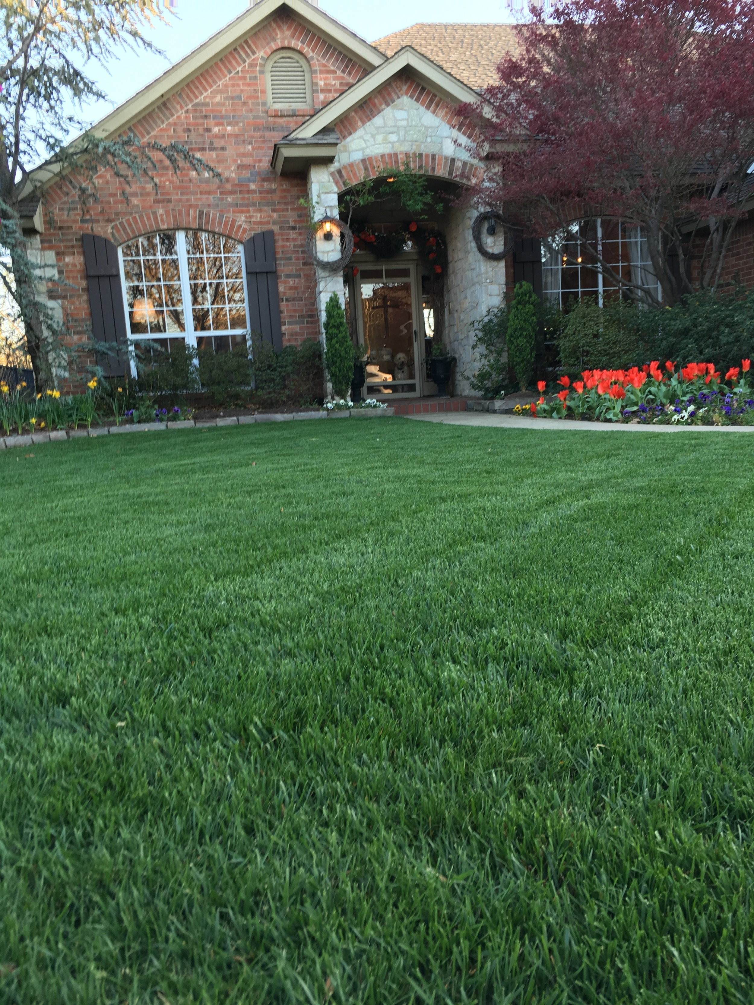 - Fescue lawn 3 weeks after Spring Lawn Maintenance