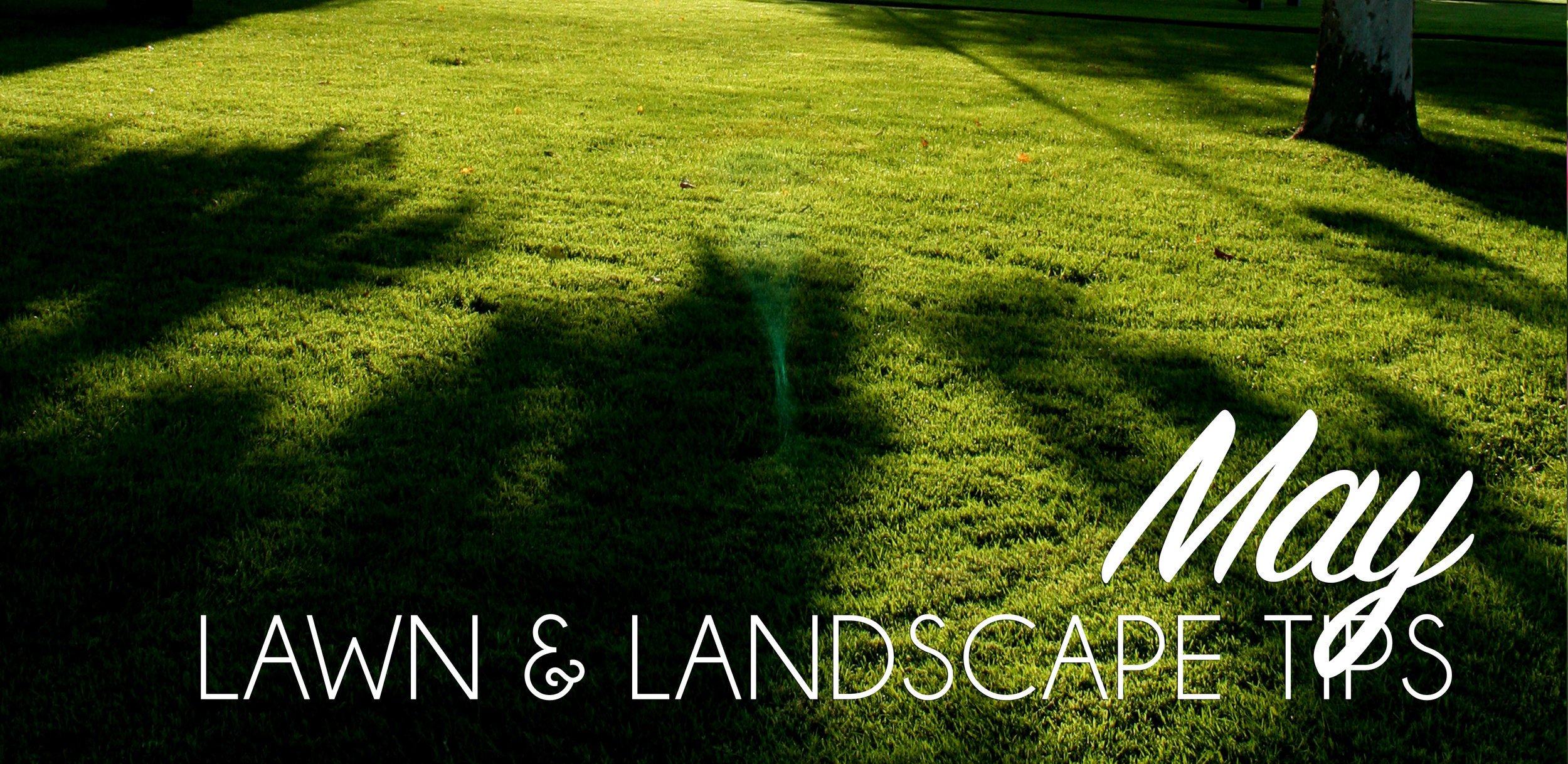 May Lawn & Landscape Tips.jpg