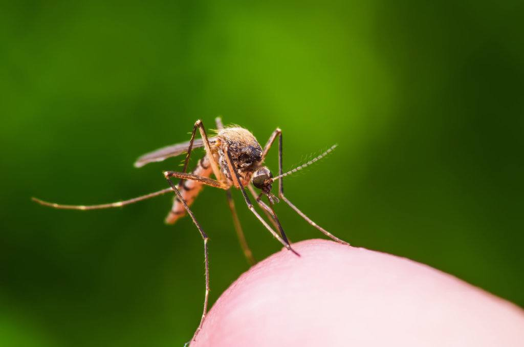 Insects  – Regularly scheduled treatments for fleas & ticks, mosquitos, and perimeter insect control around your house should continue during the summer.  The goal is to make outdoor living for your family, friends, and pets the best possible.