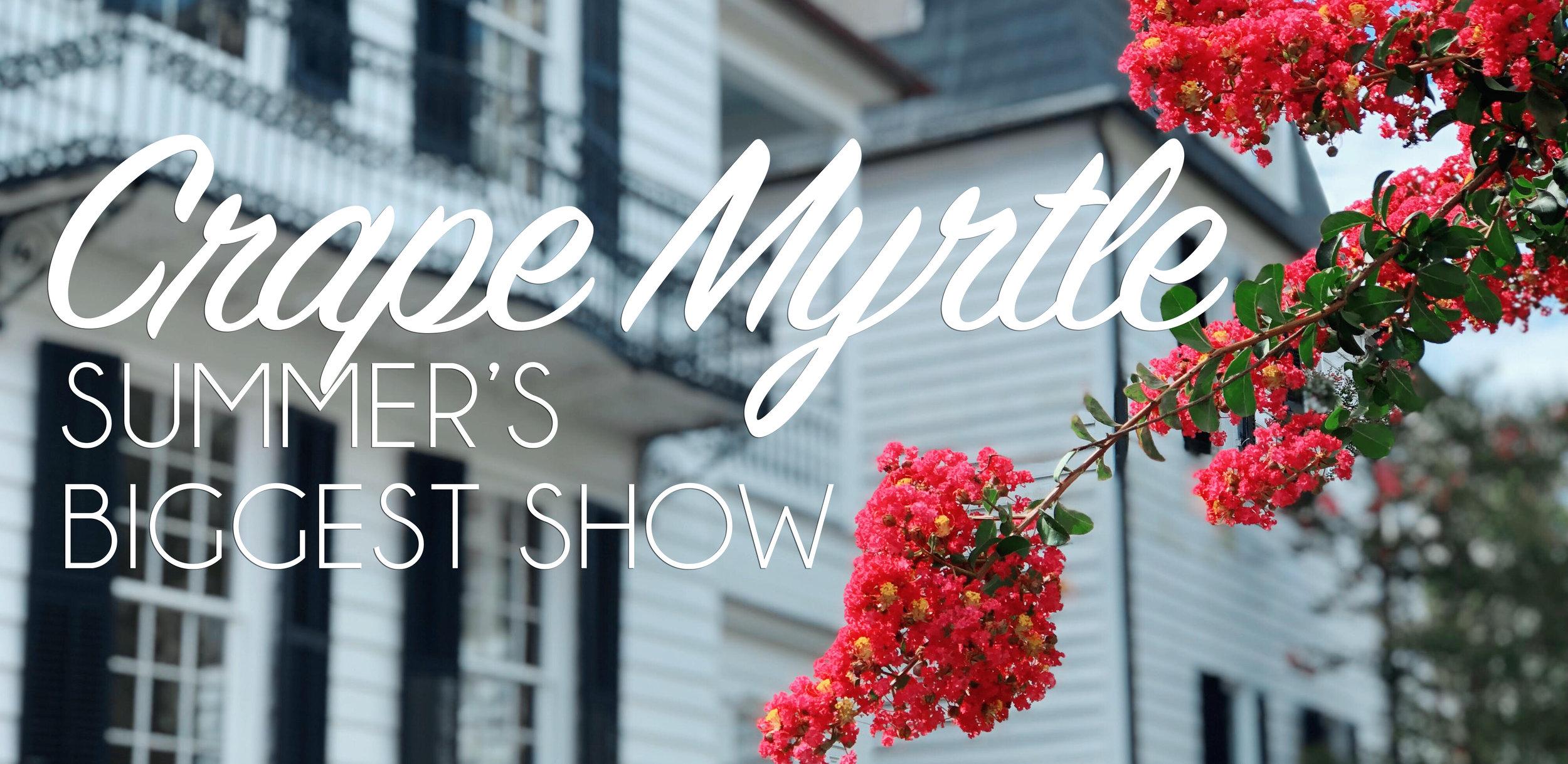 June Crape Myrtle.jpg