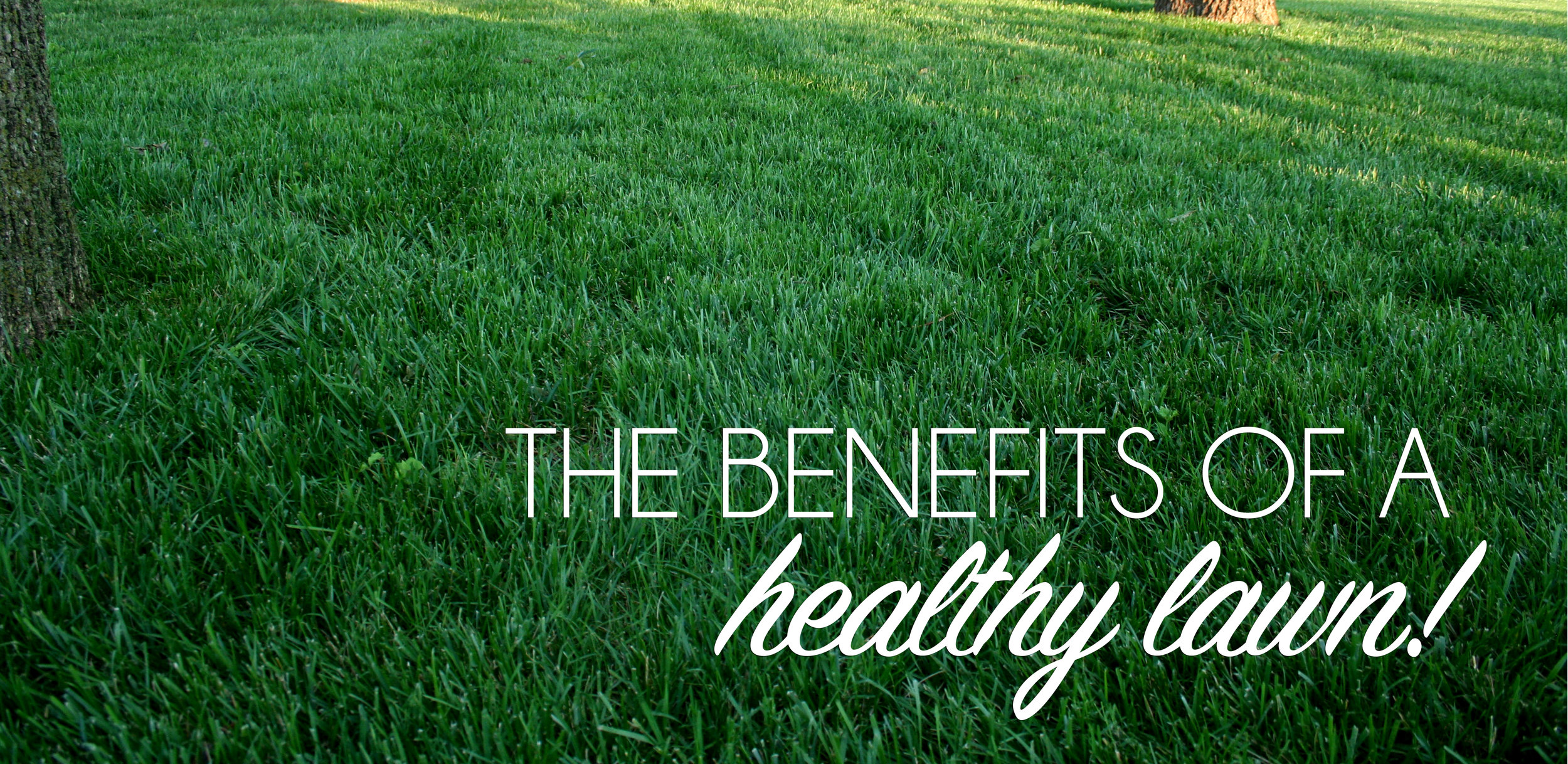 Benefits of a healthy lawn.jpg
