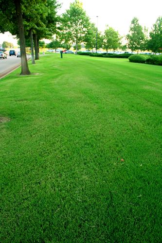 Western Lawns 004.JPG