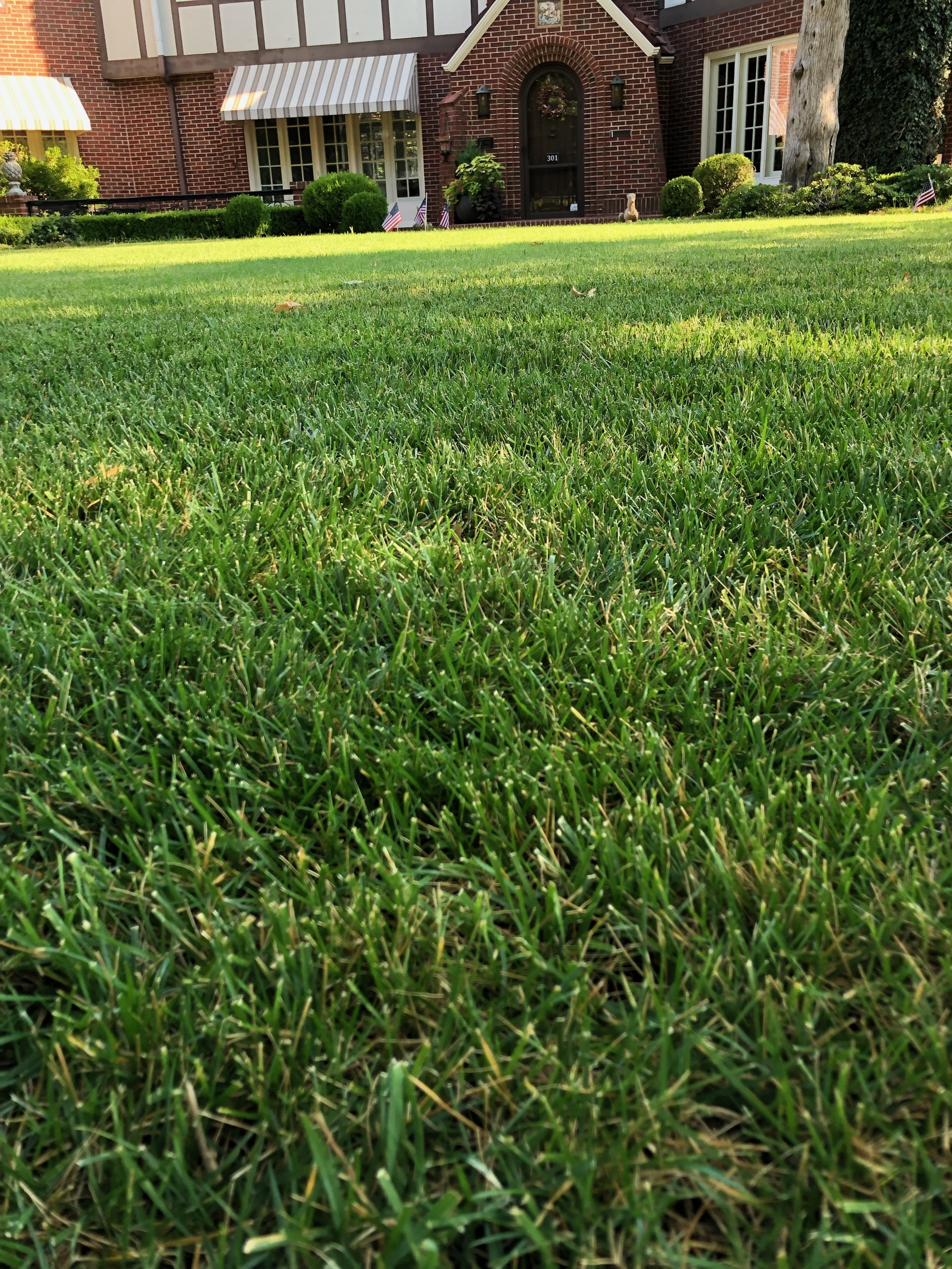 Fescue lawn with dappled sunshine.