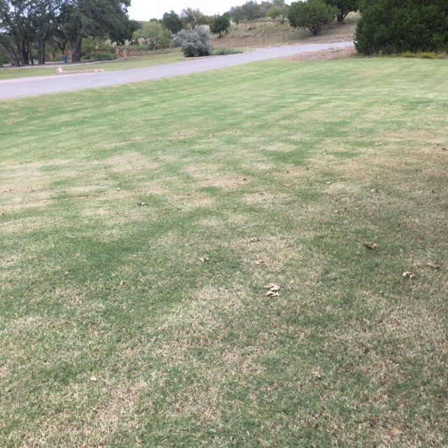 When you cut below the leaf blade into the stem your Bermuda lawn will have a scalped, brown appearance.