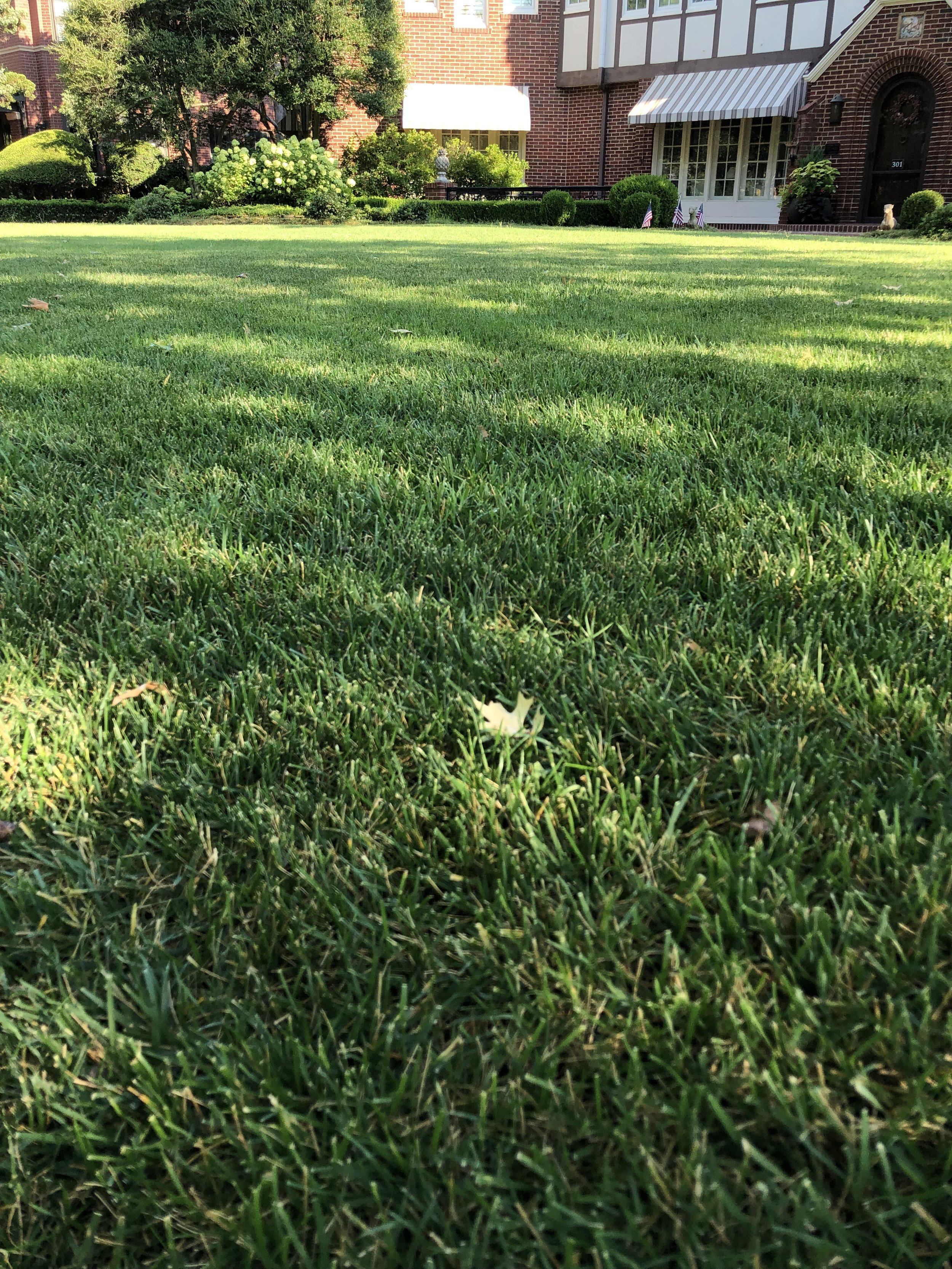 If your lawn receives less than 8 hours of direct sun light every day, then fescue is your best choice for a great lawn.