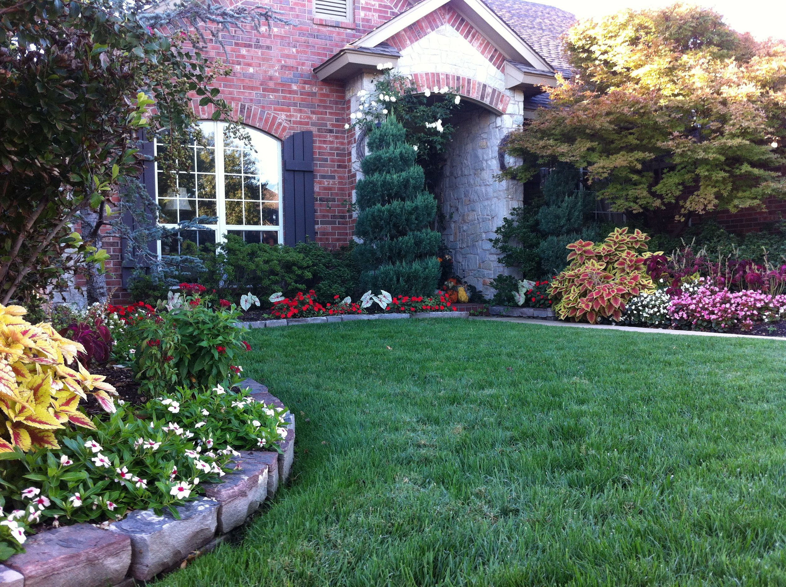 Fescue lawn 2-3 weeks after seeding.