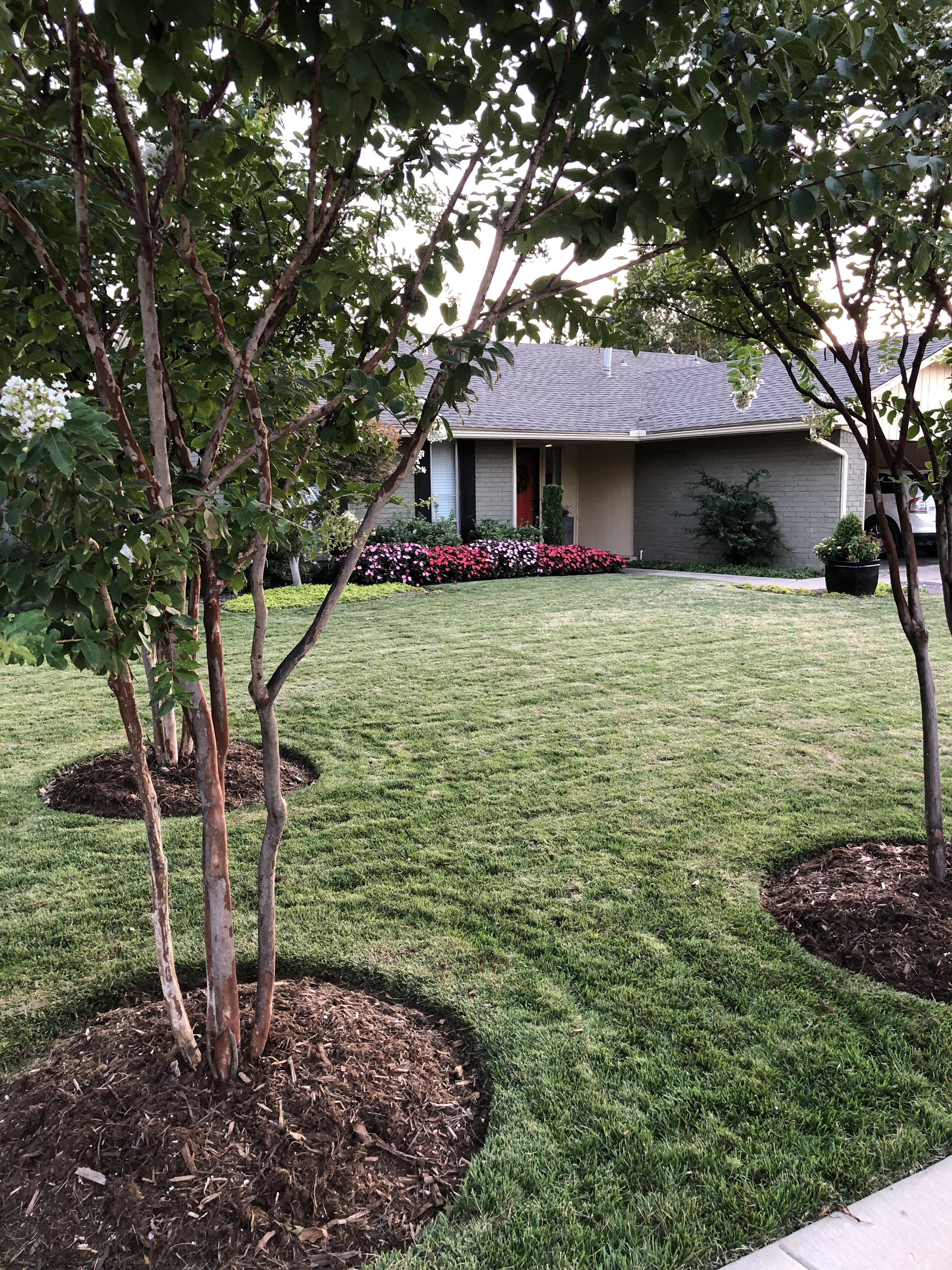 Fescue lawn cut short before seeding.