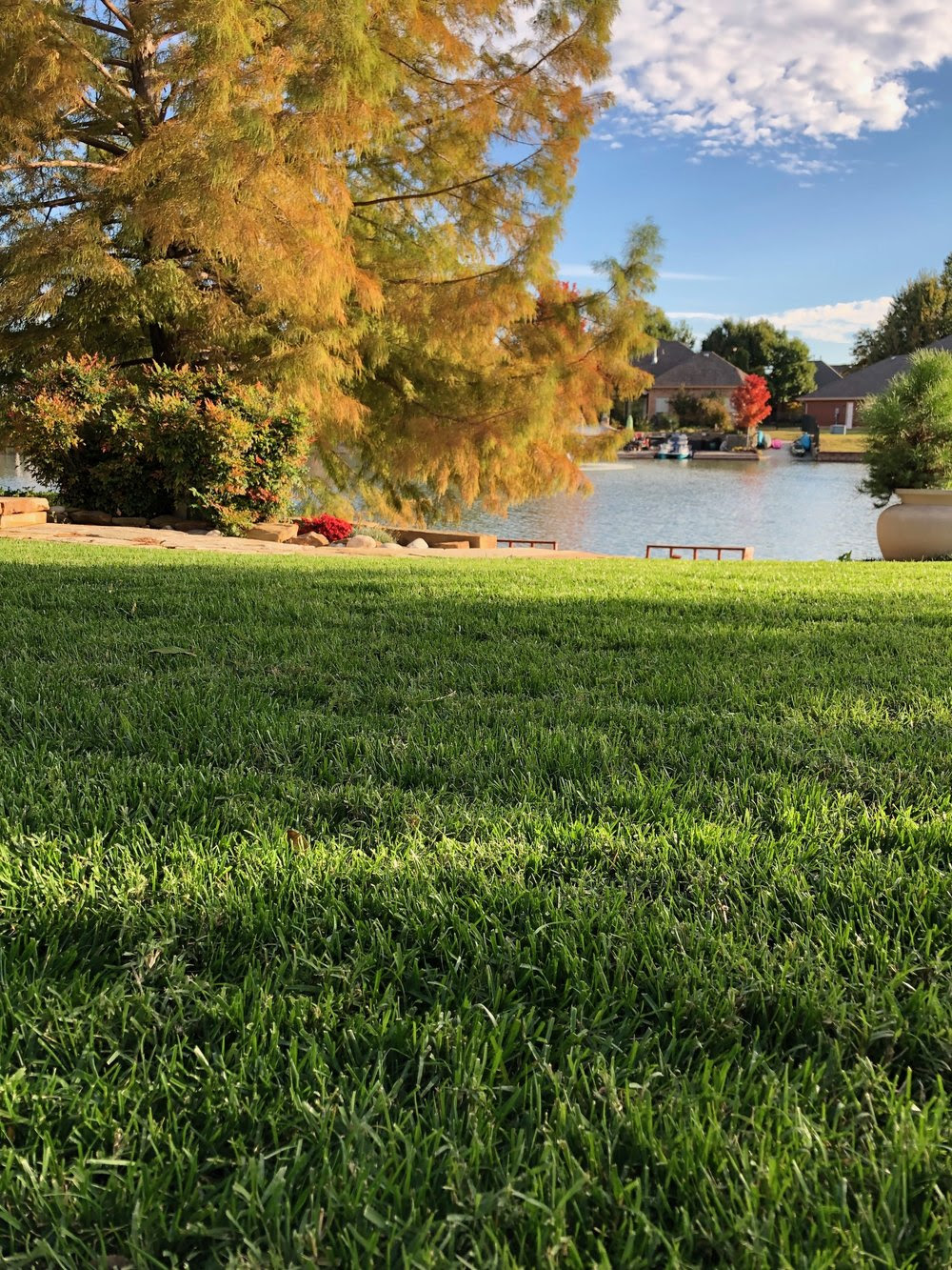 A fescue lawn in the fall.