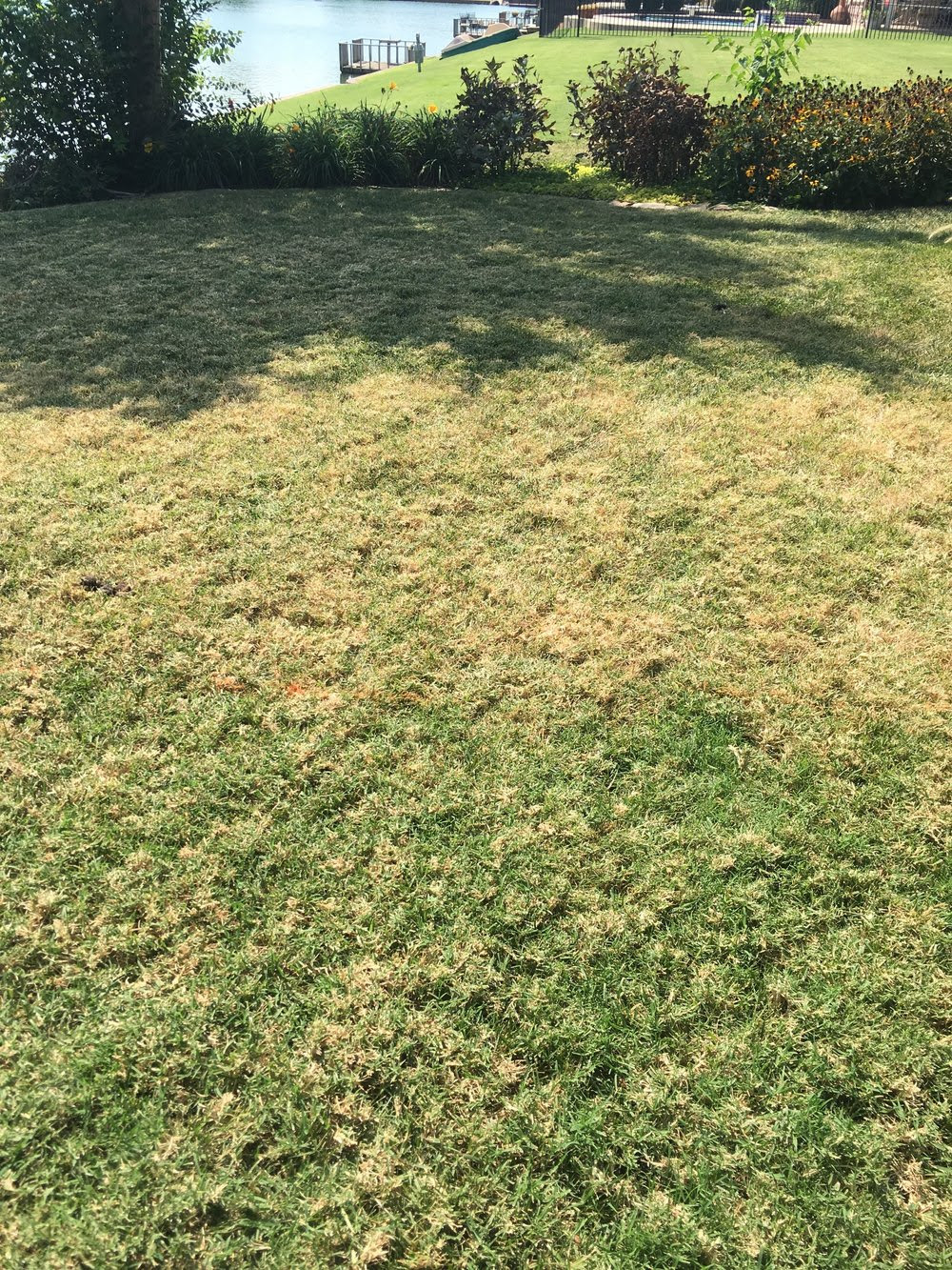 Lawn 2 weeks after treatment to control bermuda.