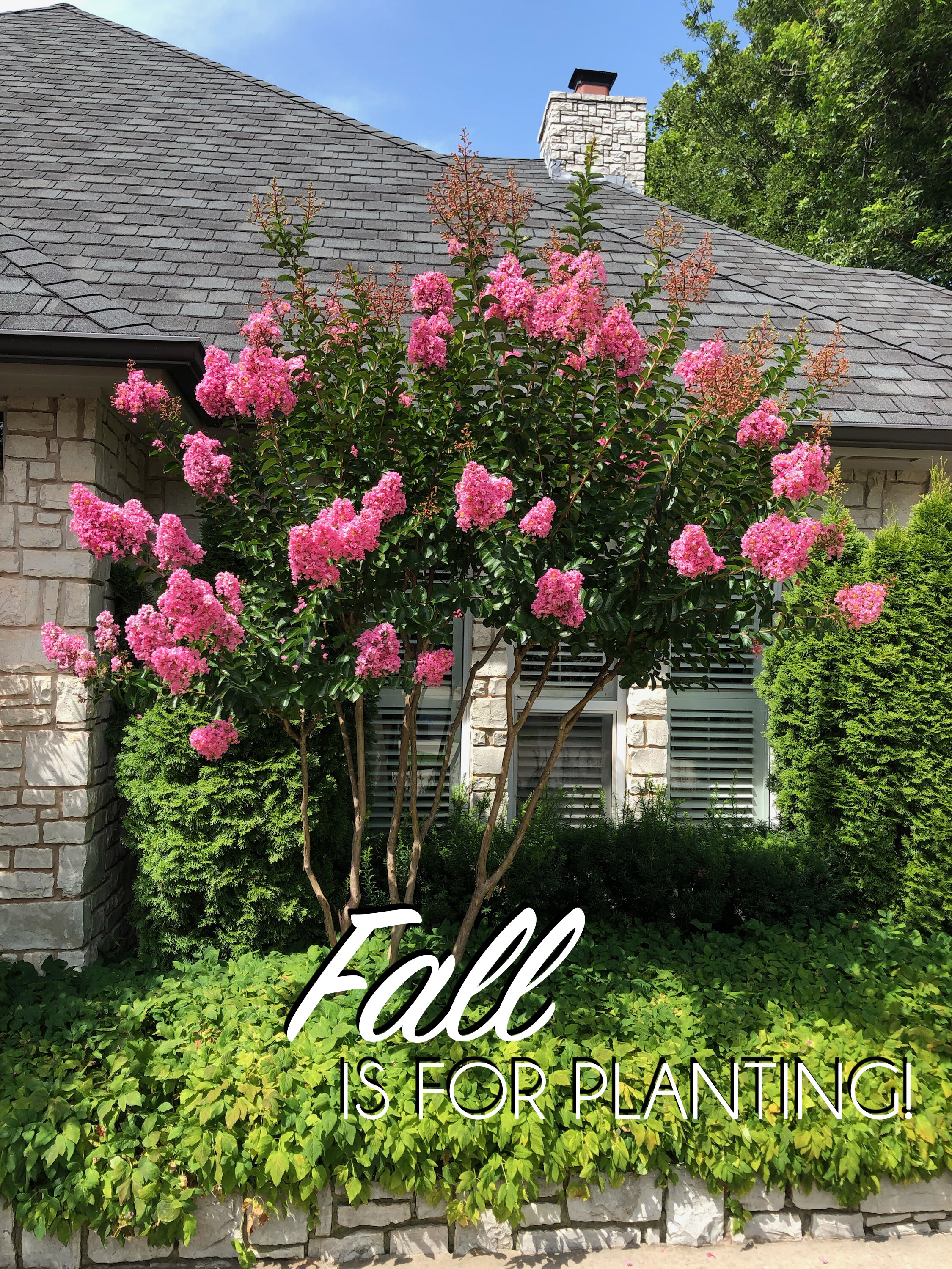 Fall is for planting.jpg