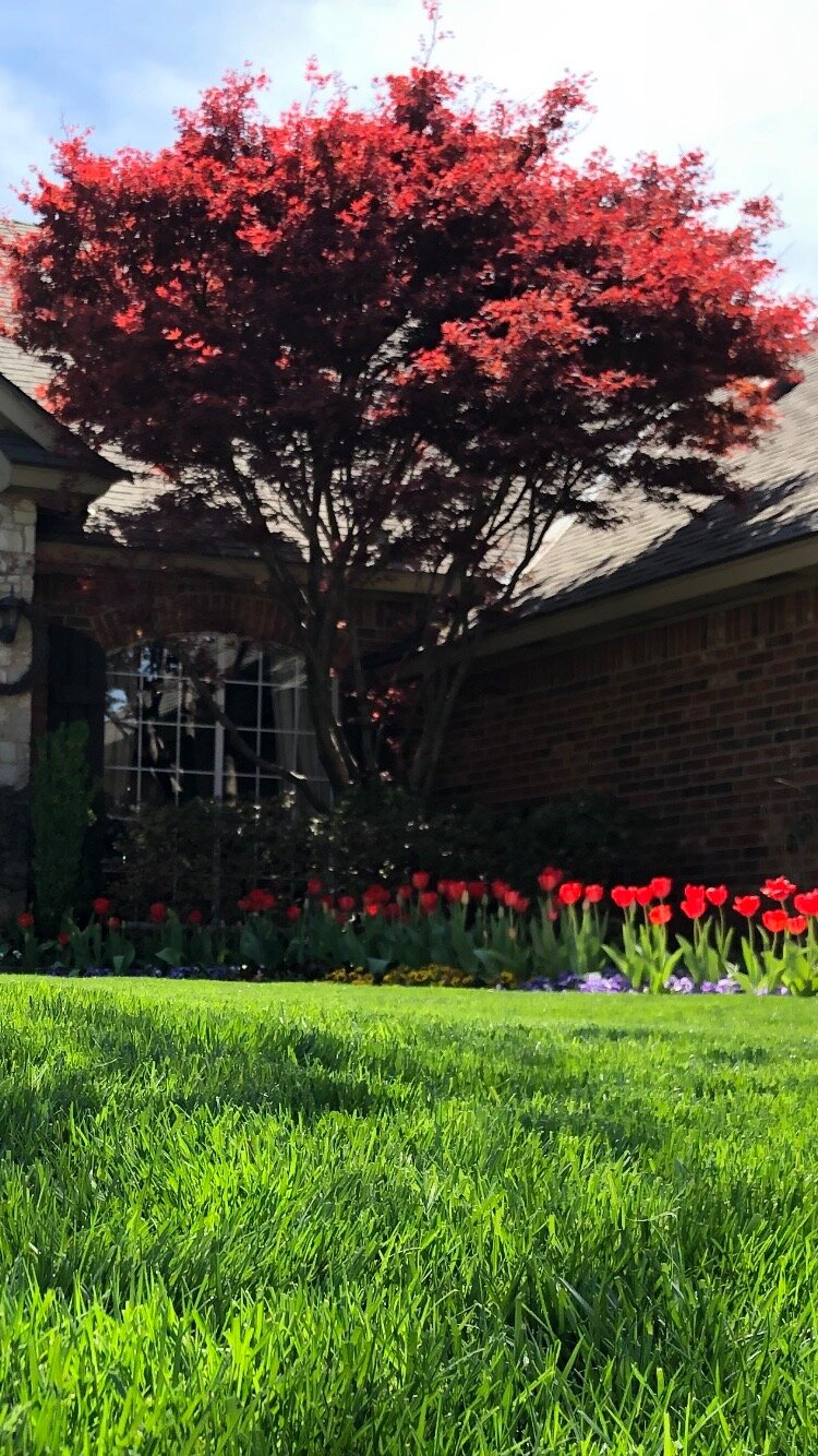 Plant a Japanese Maple this fall and have more red in your landscape next spring when leaves emerge.