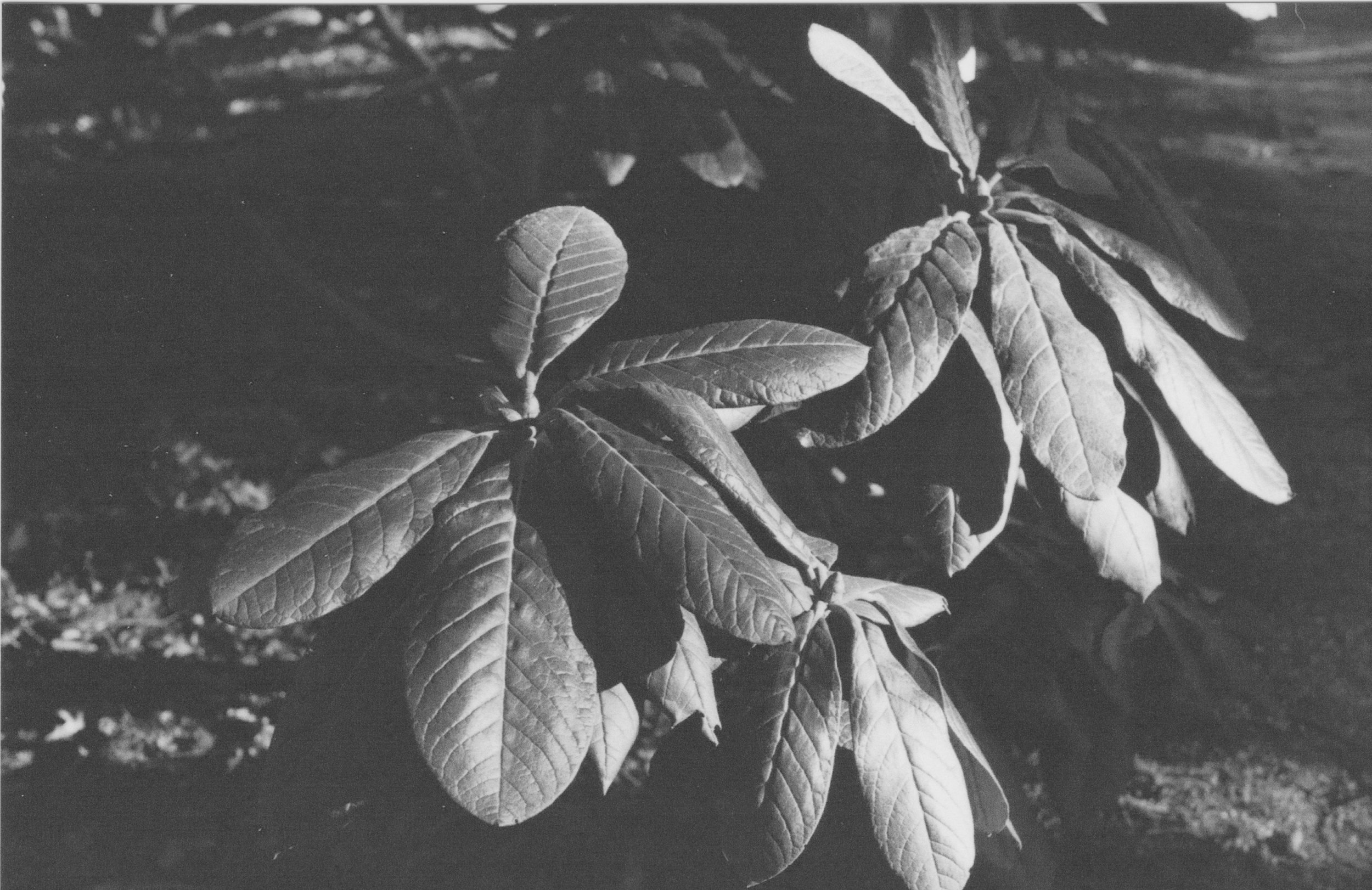 plant2.jpeg