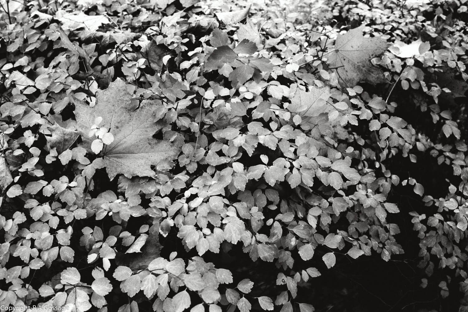Leaves_B&W_1 (1 of 1).jpg