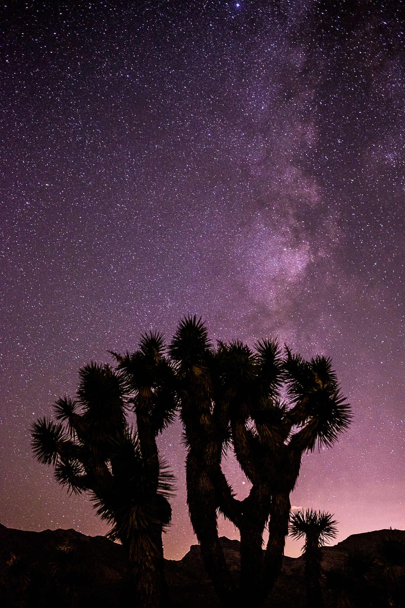 Joshua Tree and the Milky Way, Virgin River Gorge
