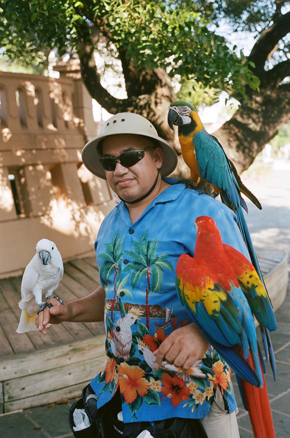 parrotguyprweb.jpg