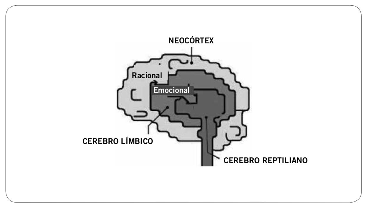 El neocórtex procesa el equivalente a 40 bits por segundo. El cerebro límbico procesa el equivalente a 11 millones de bits por segundo.