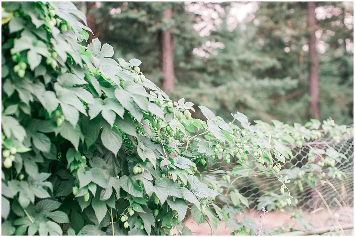 backyard hops