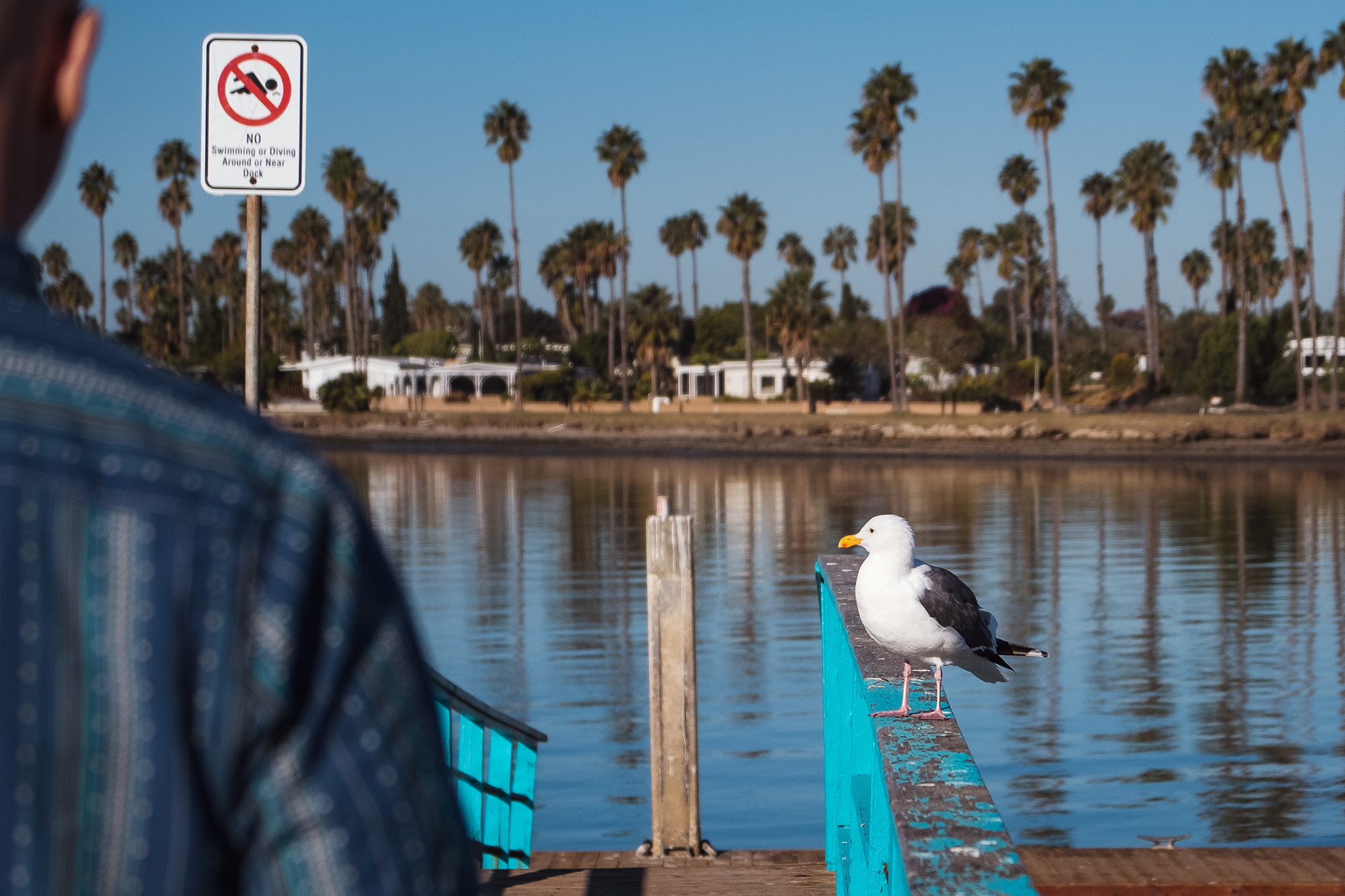 San Diego 2017-368 resize.jpg