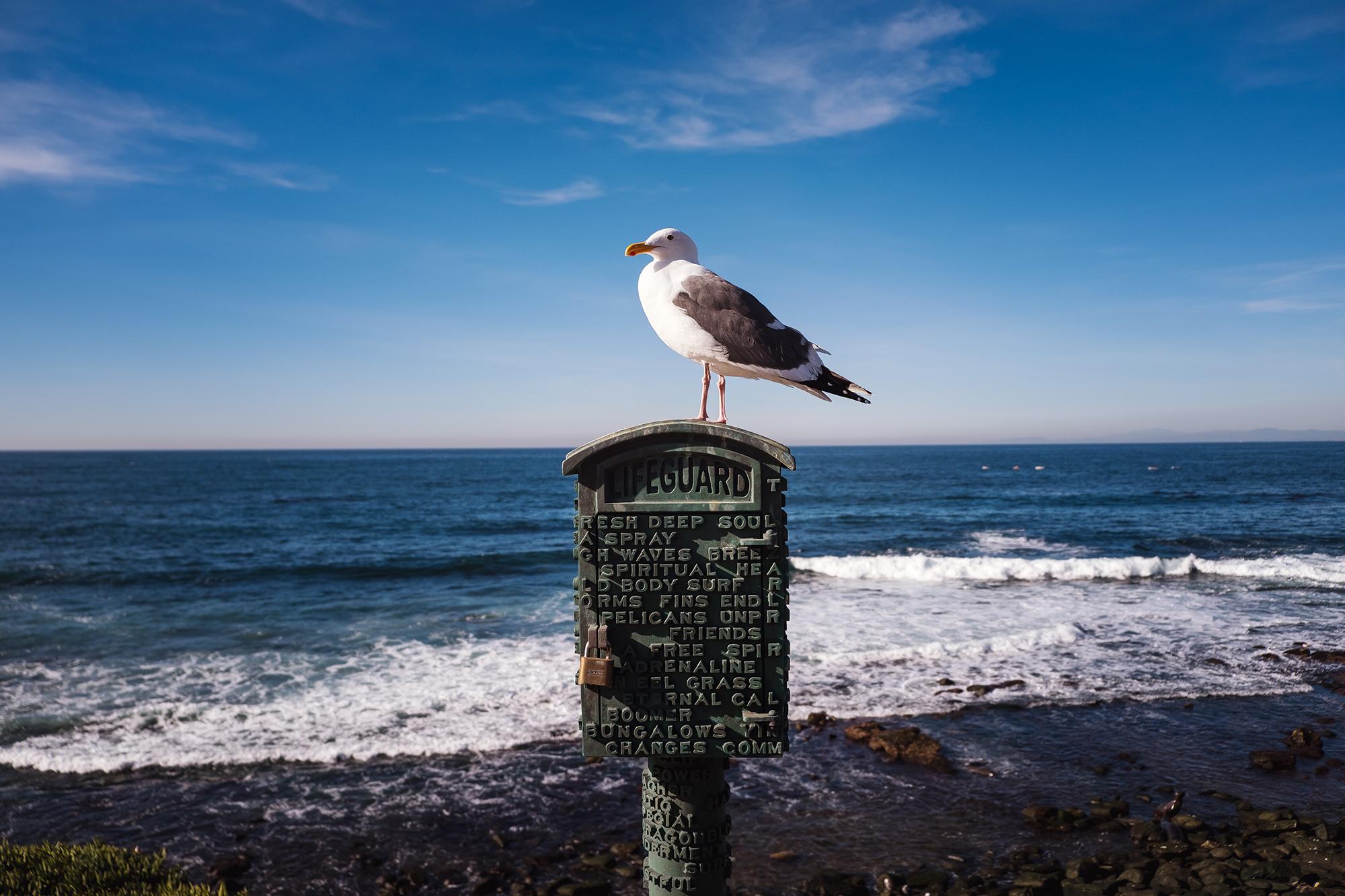 San Diego 2017-846 resize.jpg