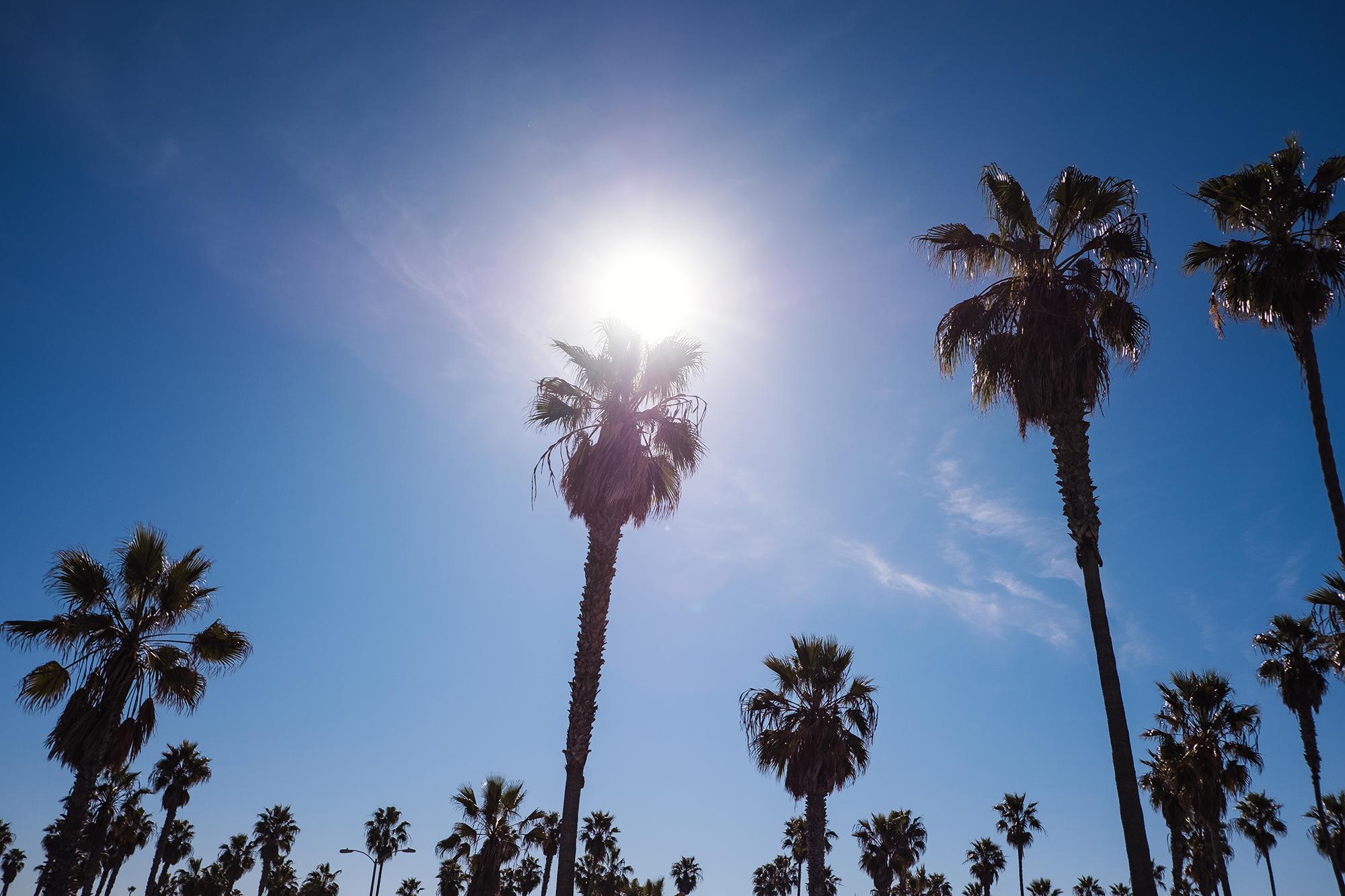 San Diego 2017-1071 resize.jpg