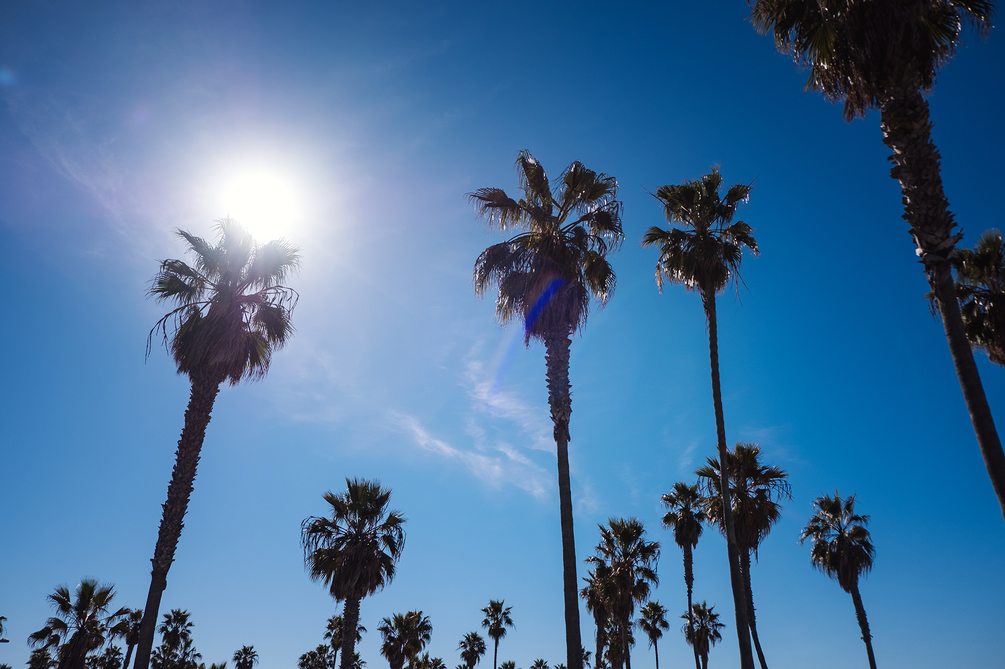 San Diego 2017-1073 resize.jpg