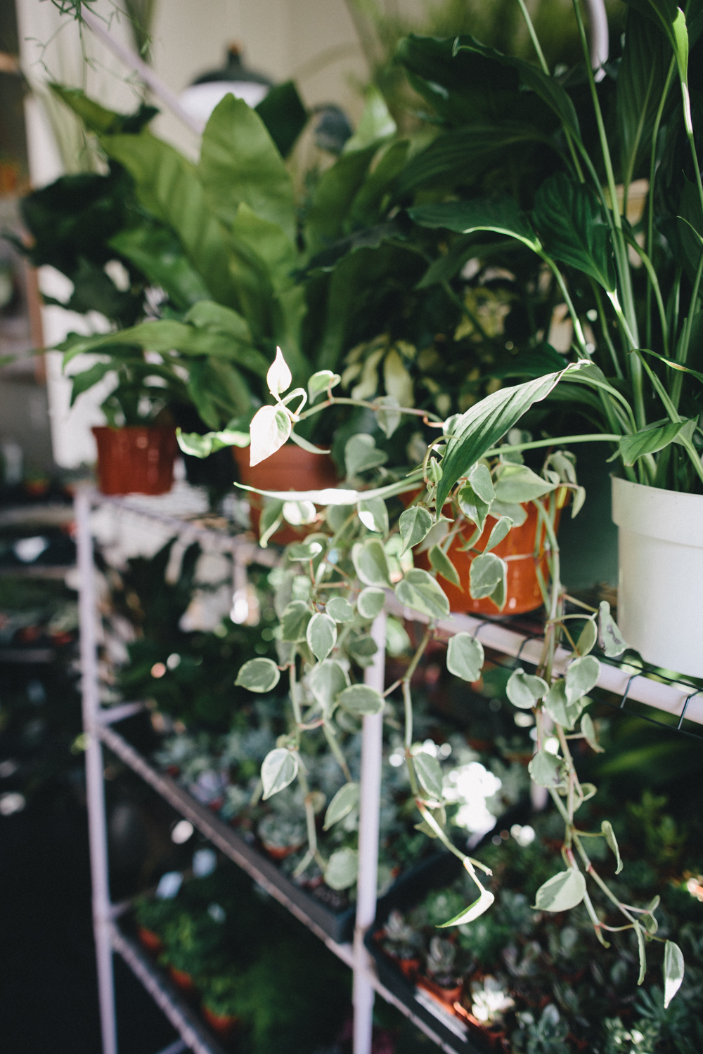 Plants and Friends San Franicsco Plant Shop Rachelle Derouin Photography-17.jpg