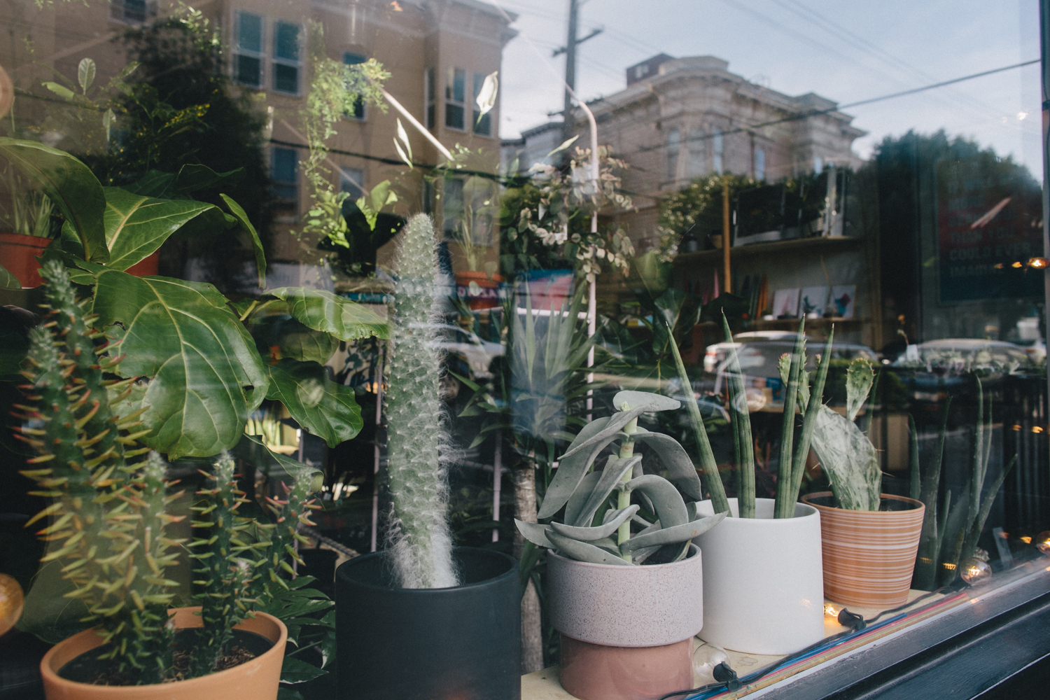 Plants and Friends San Franicsco Plant Shop Rachelle Derouin Photography-30.jpg