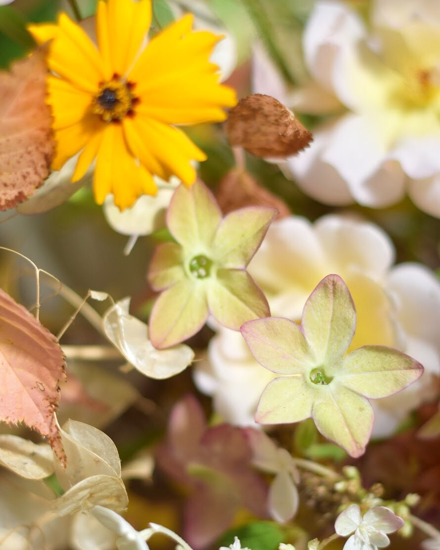 alicebeasleyflowerssummerwedding.jpg