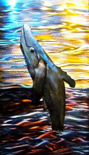 humpback in frame.jpg