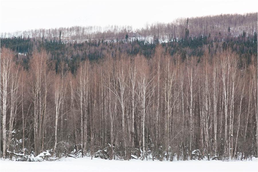 Alaska Photography_Northern Lights Photography_Travel Photography-21