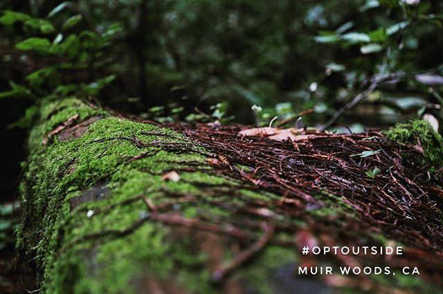 #optoutside #muirwoods with @nate.wo @chriswong31