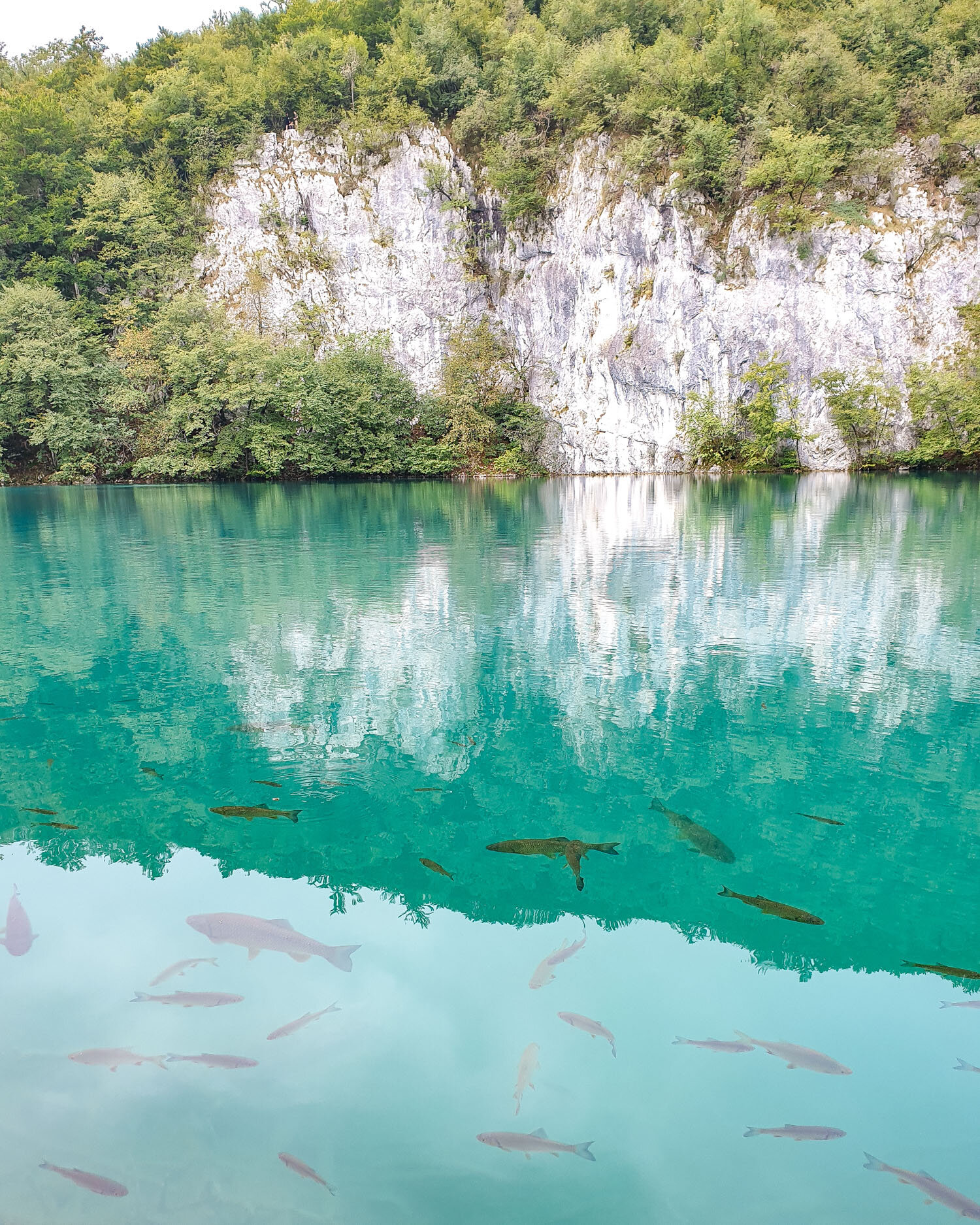 The water is so clear you can see the fish! | Plitvice Lakes National Park Croatia