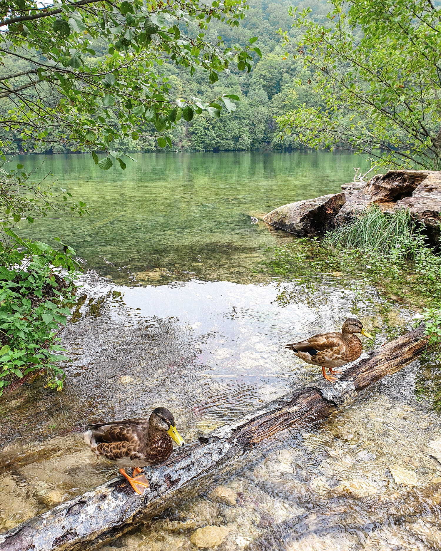look at these cuties :) | Plitvice Lakes National Park Croatia