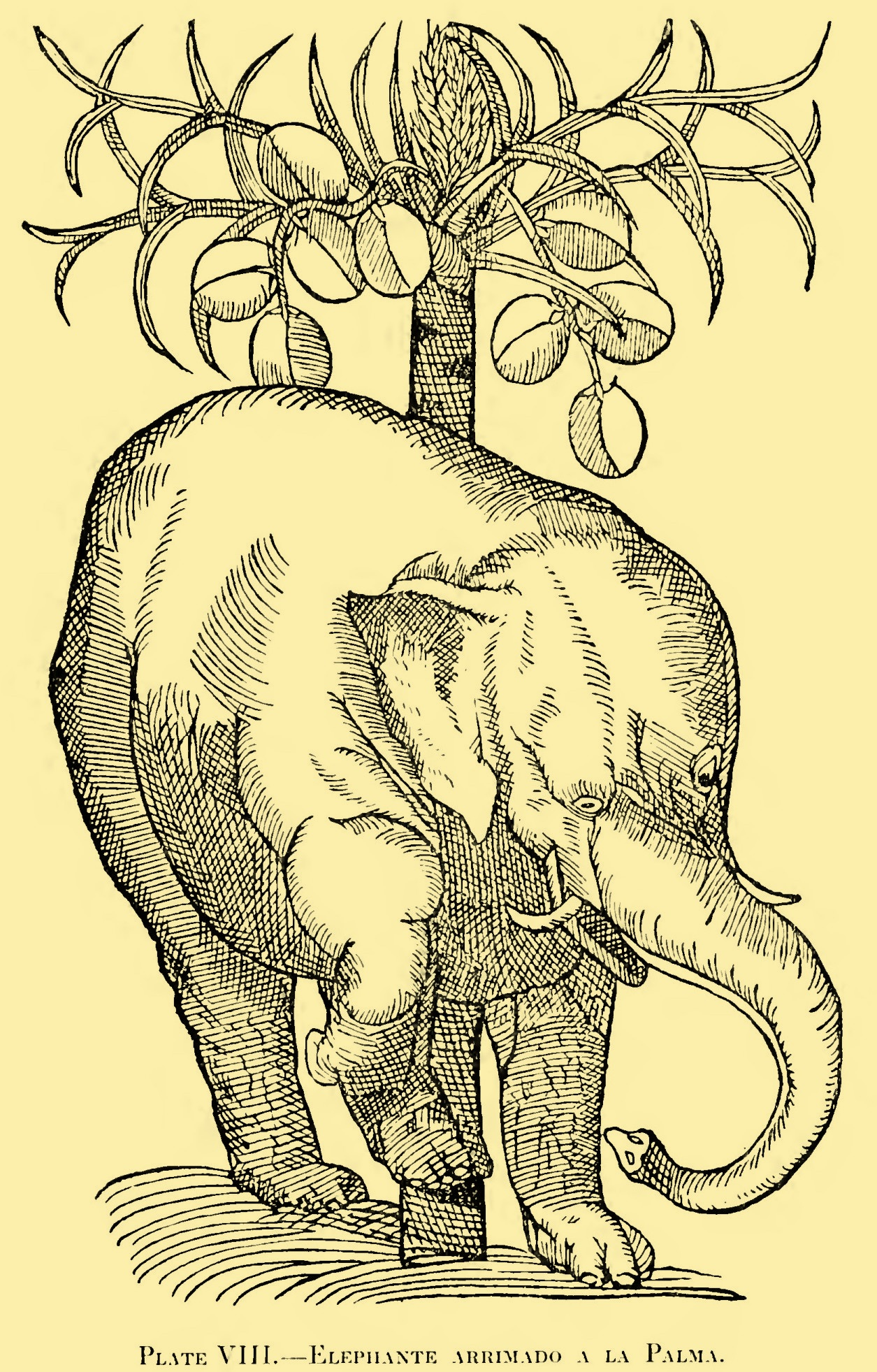Illustrations from the Colóquios