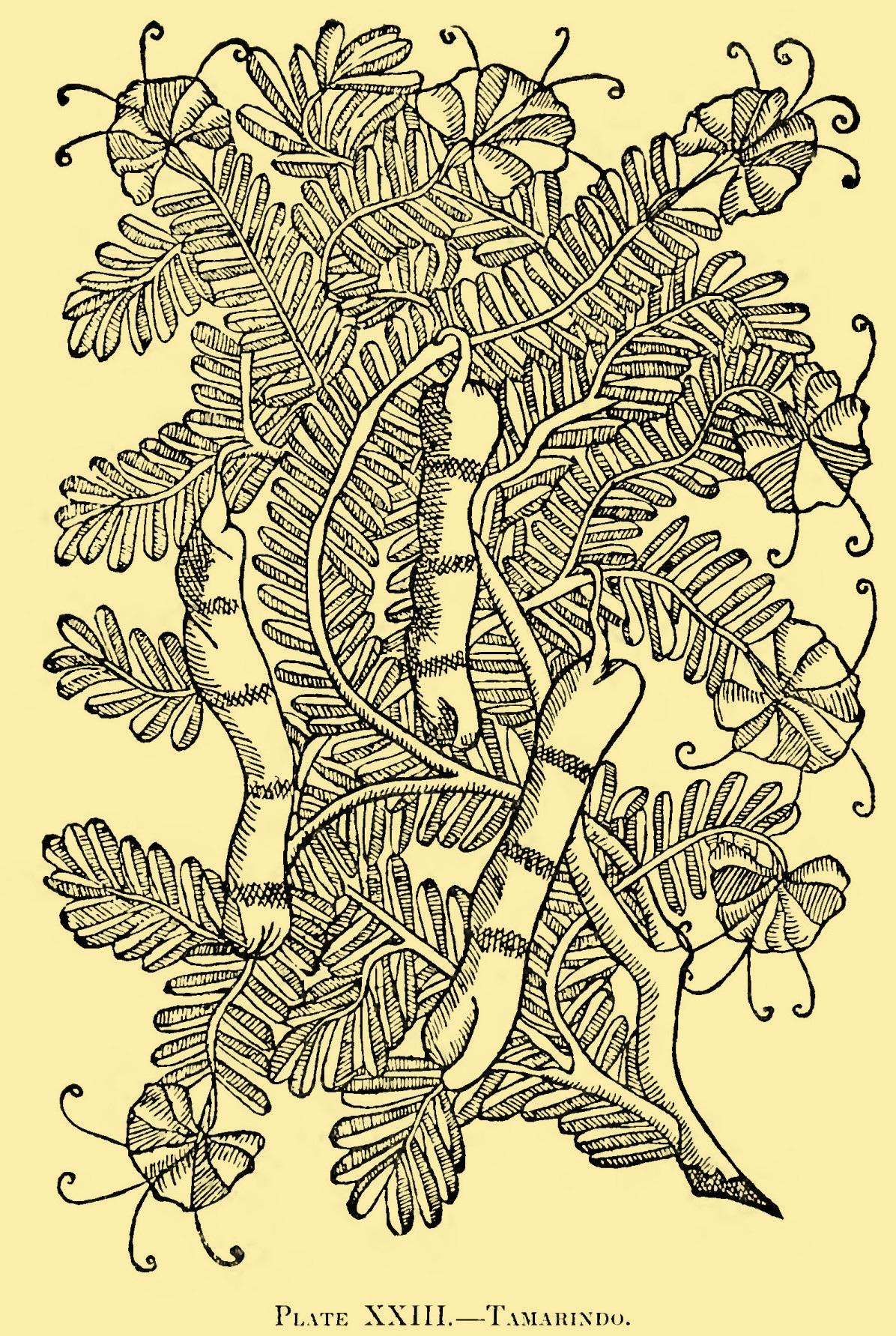 Colloquies Illustrations-23.jpg