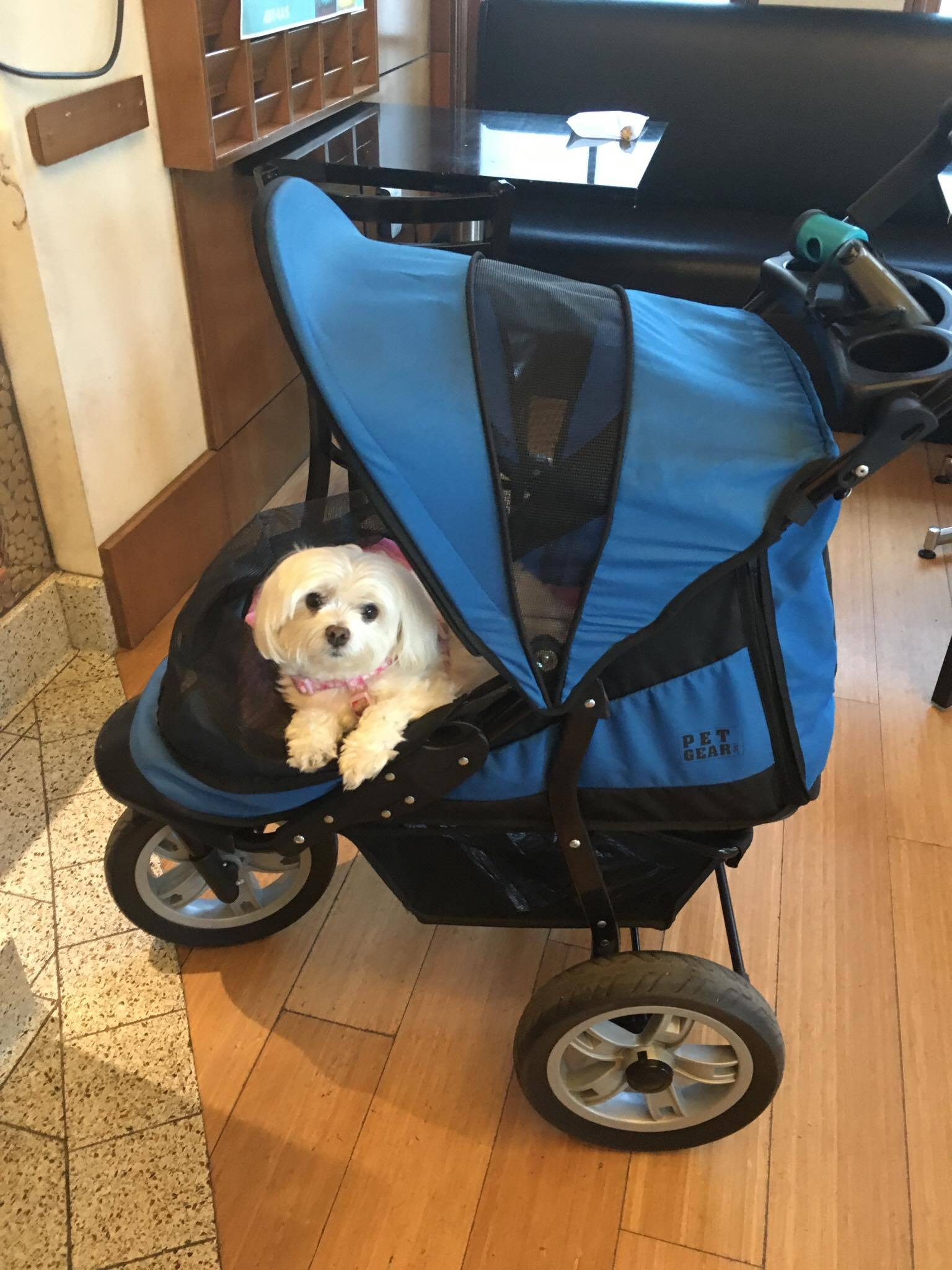 Zoey stroller2.jpg