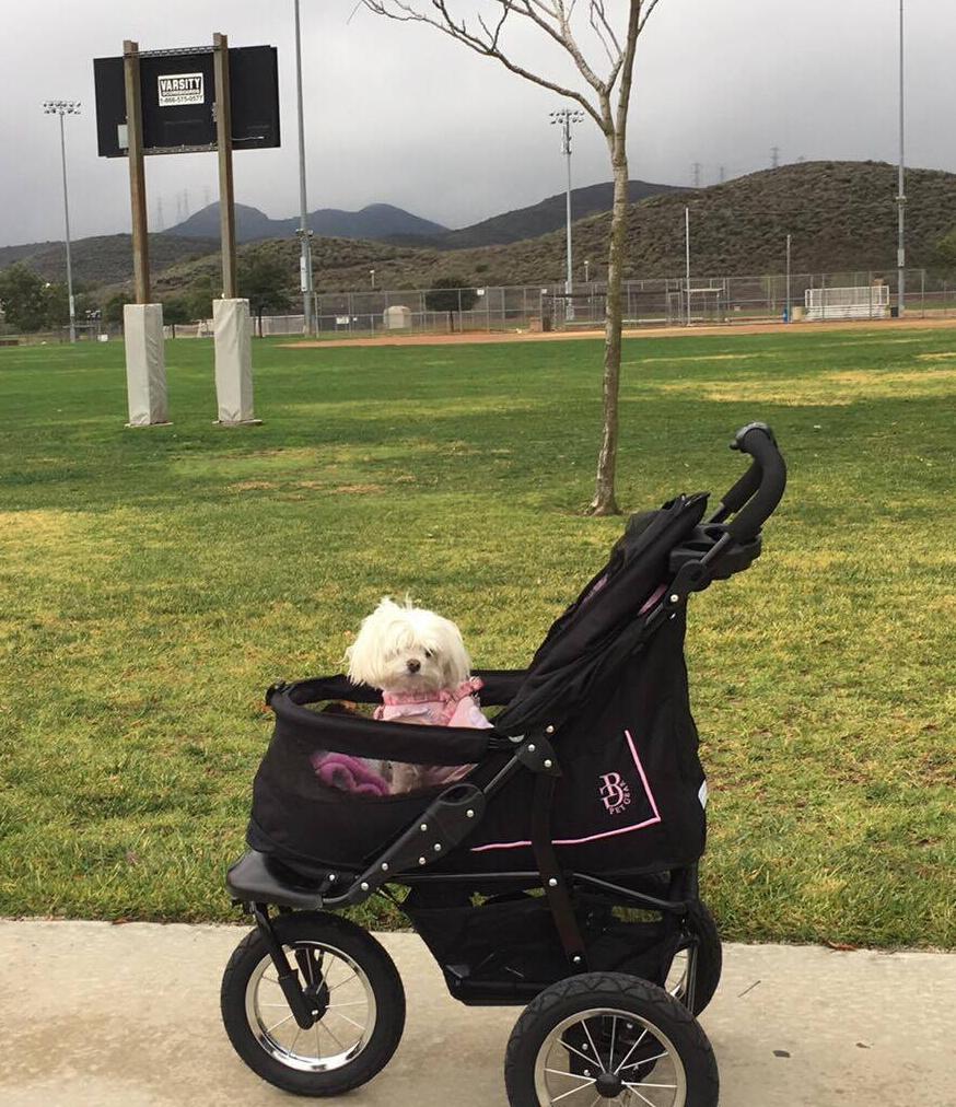 Zoey stroller1.jpg