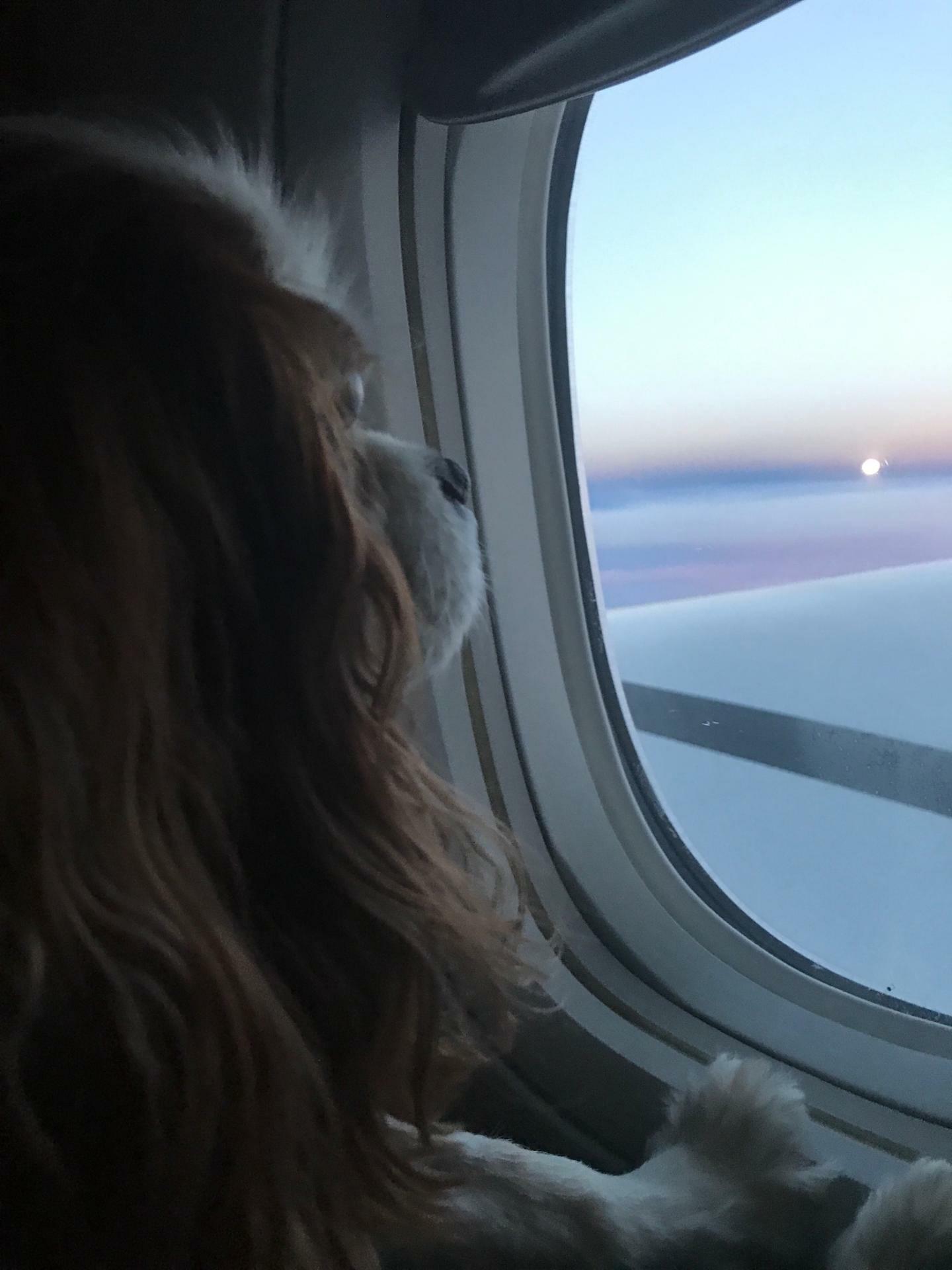 Bailey Airplane.jpg