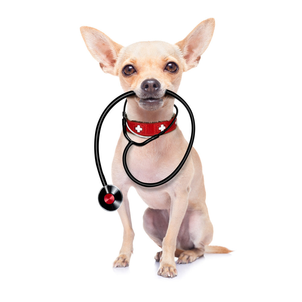 """""""Open heart surgeries under extracorporeal circulation in small breed dogs for mitral repair and cords has never before been done so successfully"""" -"""